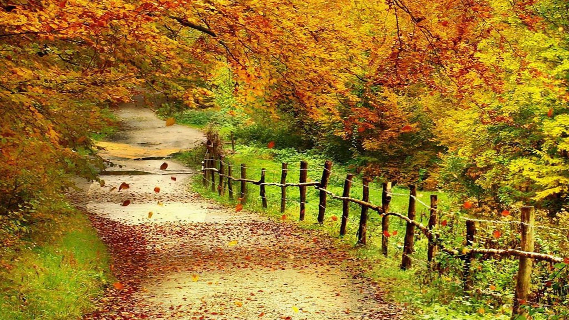 Free Download Wallpaper: Autumn Scenery Wallpaper (57+ Images
