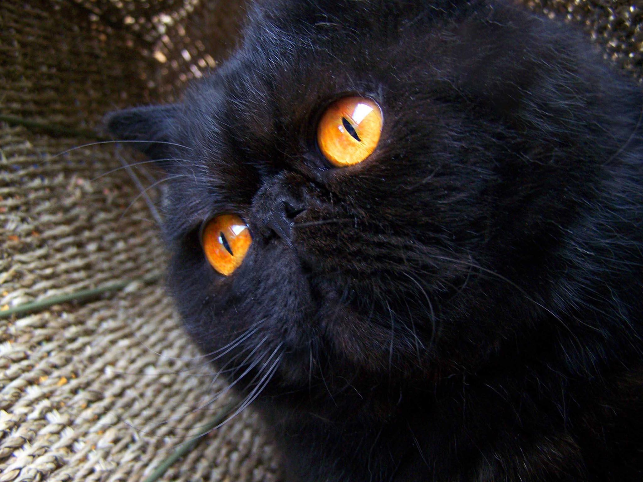 Black Cat Halloween Wallpaper (51+ images)