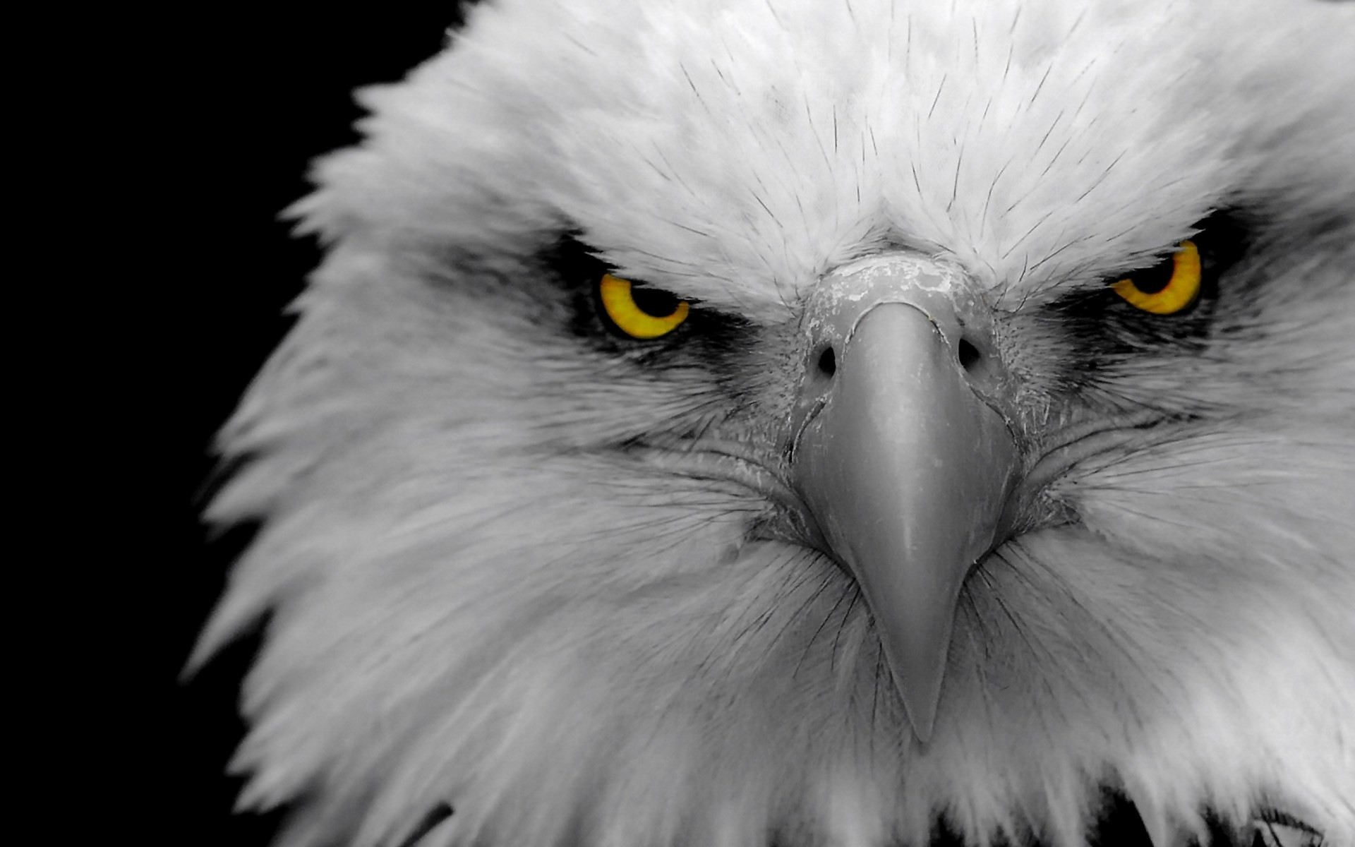 Eagle Wallpaper (81+ images)