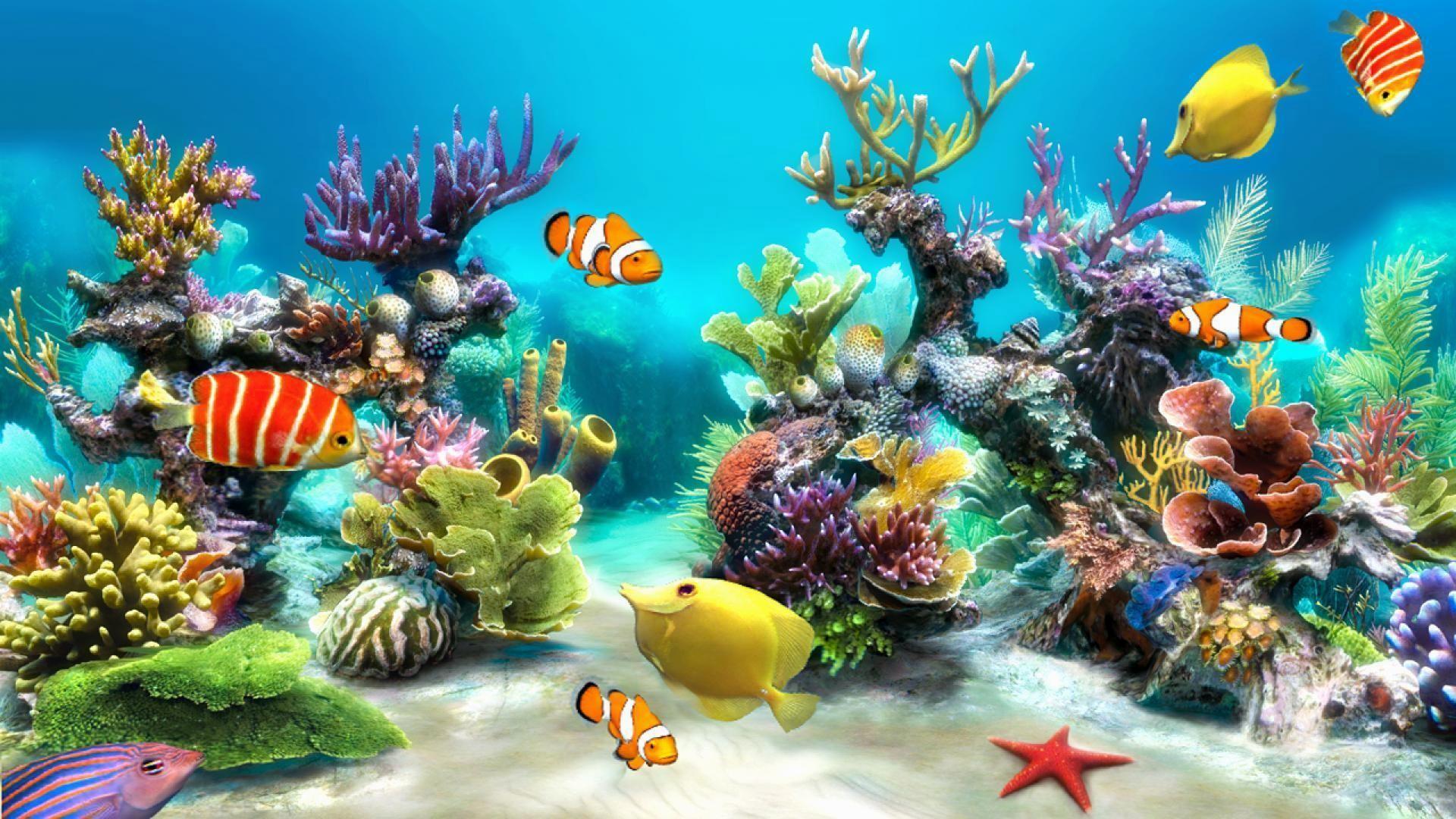 Animated Aquarium Desktop Wallpaper 53 Images