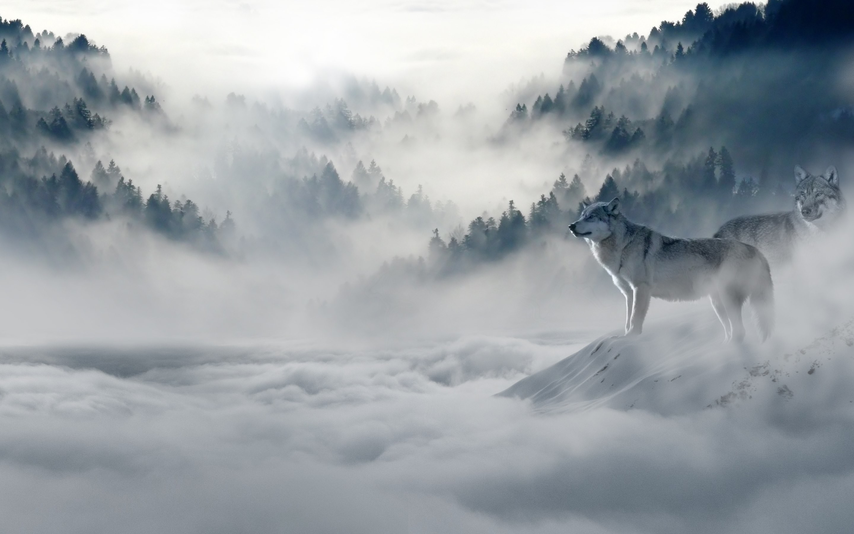 Wolf Wallpaper for iPhone 72+ images