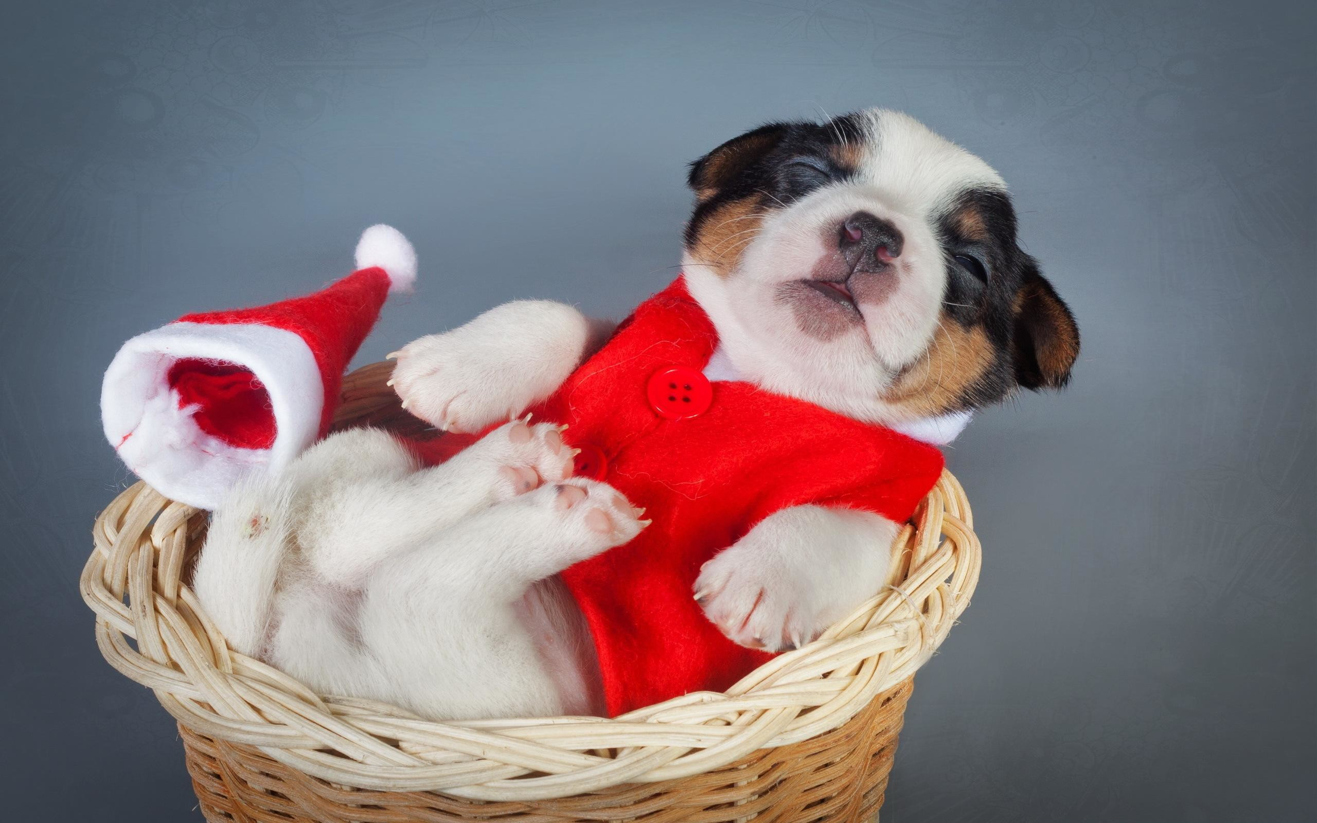 2560x1600 HD Dogs Christmas New Year Puppy Animals High Resolution Wallpaper