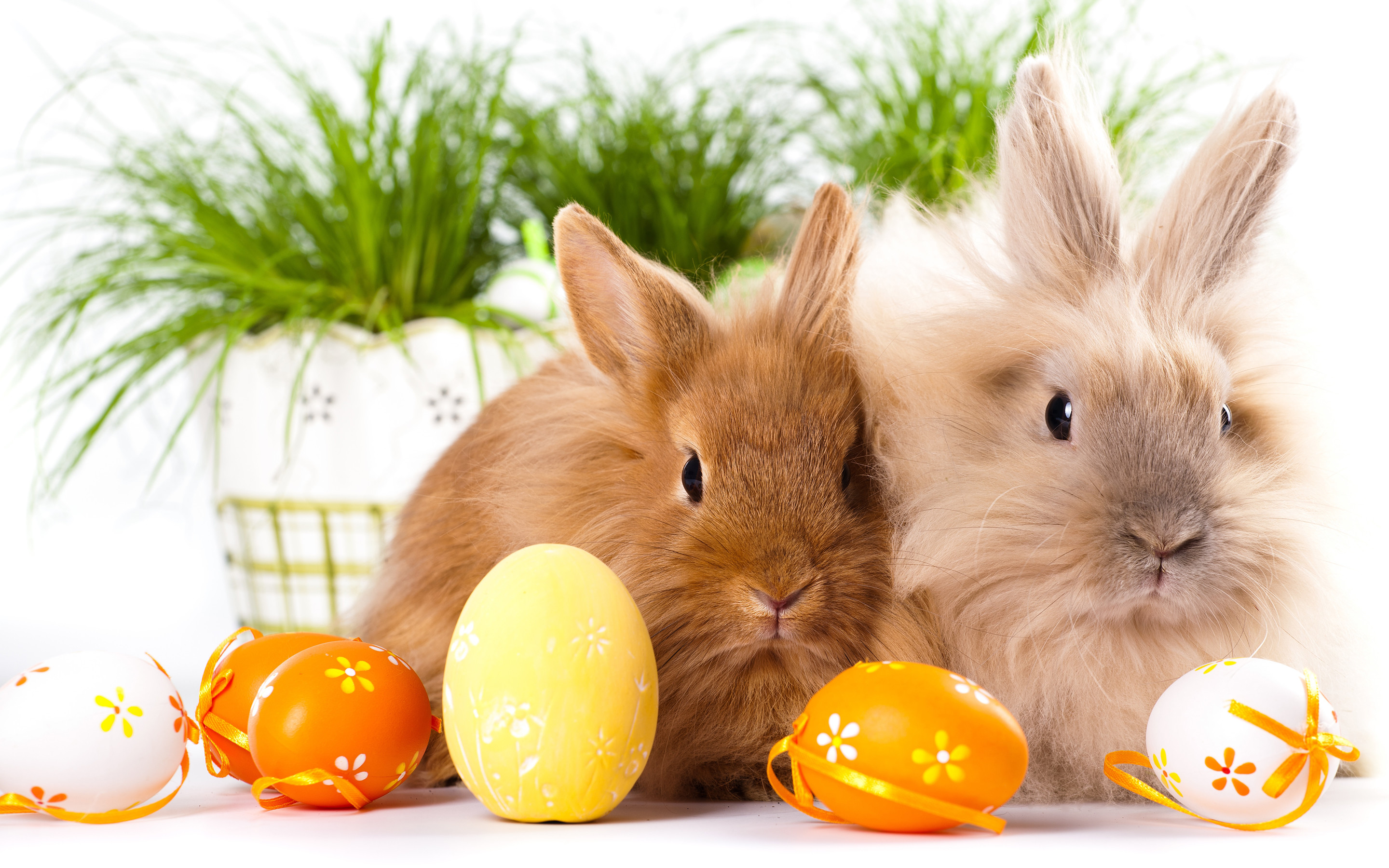 2880x1800 easter bunnies free hd wallpaper background