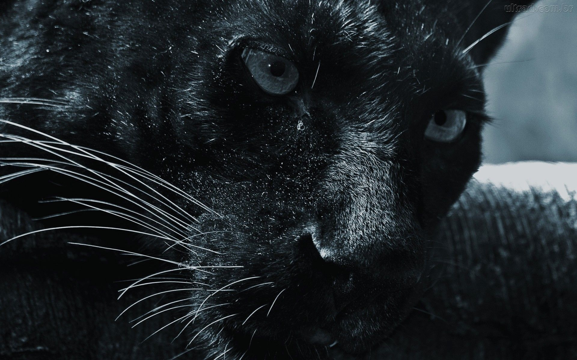 1920x1200 Black Jaguar widescreen