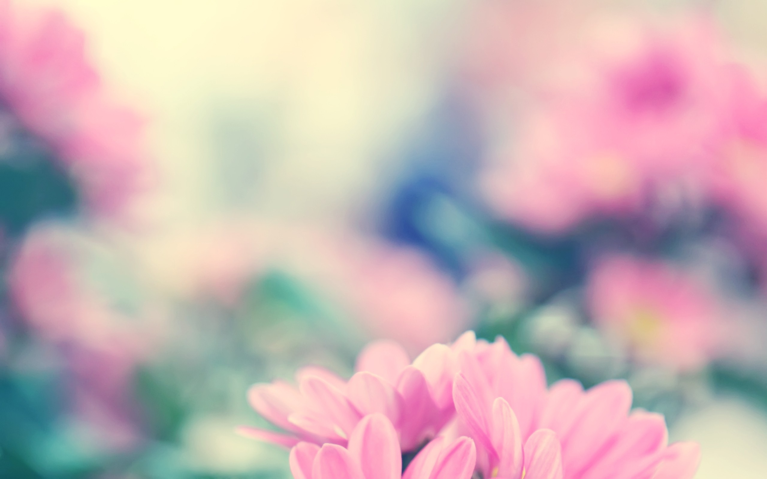2560x1600 Spring Flowers Background Free Download.