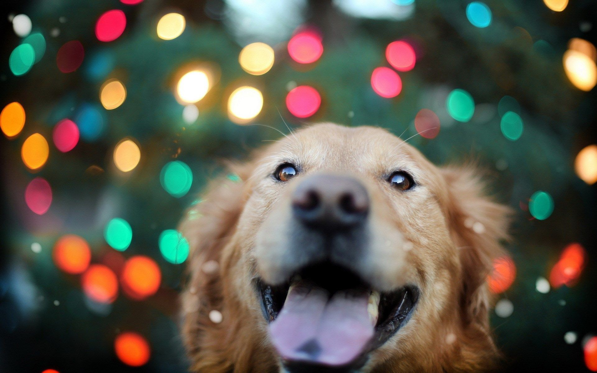1920x1200 Free Christmas Puppy Wallpaper Picture Â« Long Wallpapers ...
