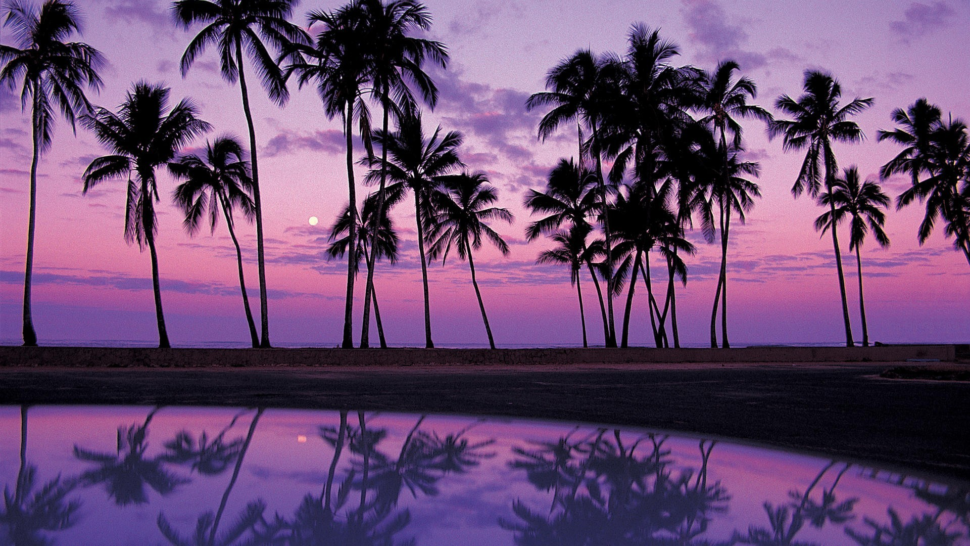 1920x1080 Desktop Palm Tree Backgrounds.