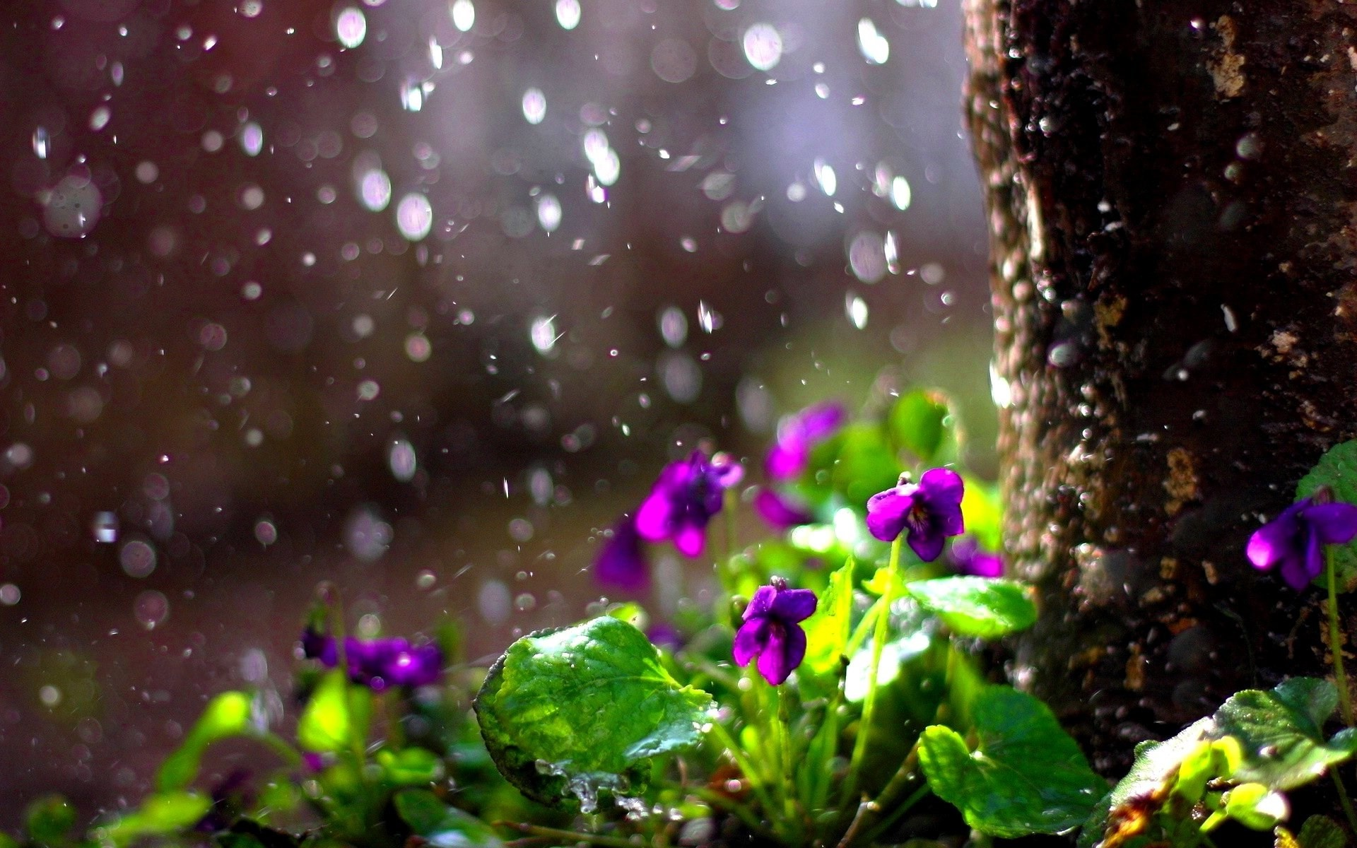 1920x1200 Spring Rain Wallpapers Background for HD Wallpaper Desktop px KB