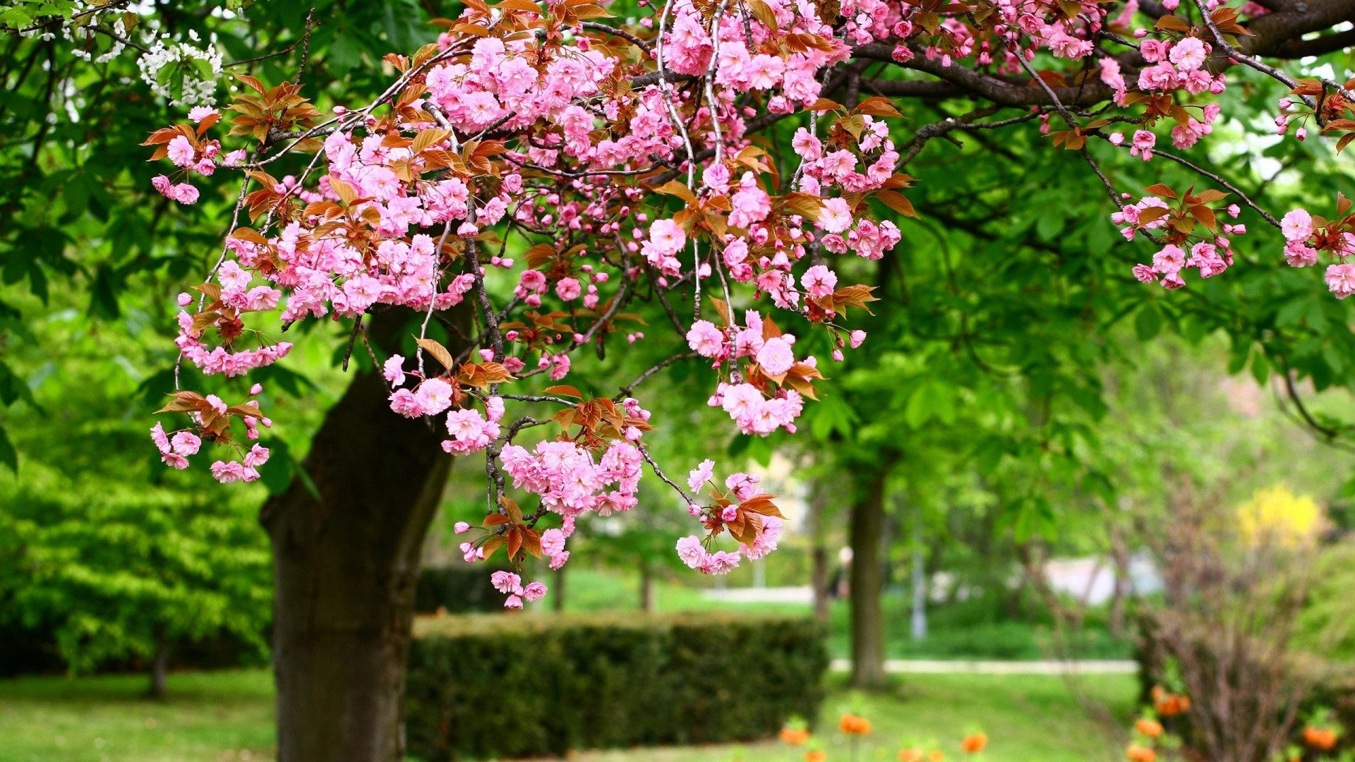 1920x1080 Spring Flowers Live Wallpaper Android Apps on Google Play