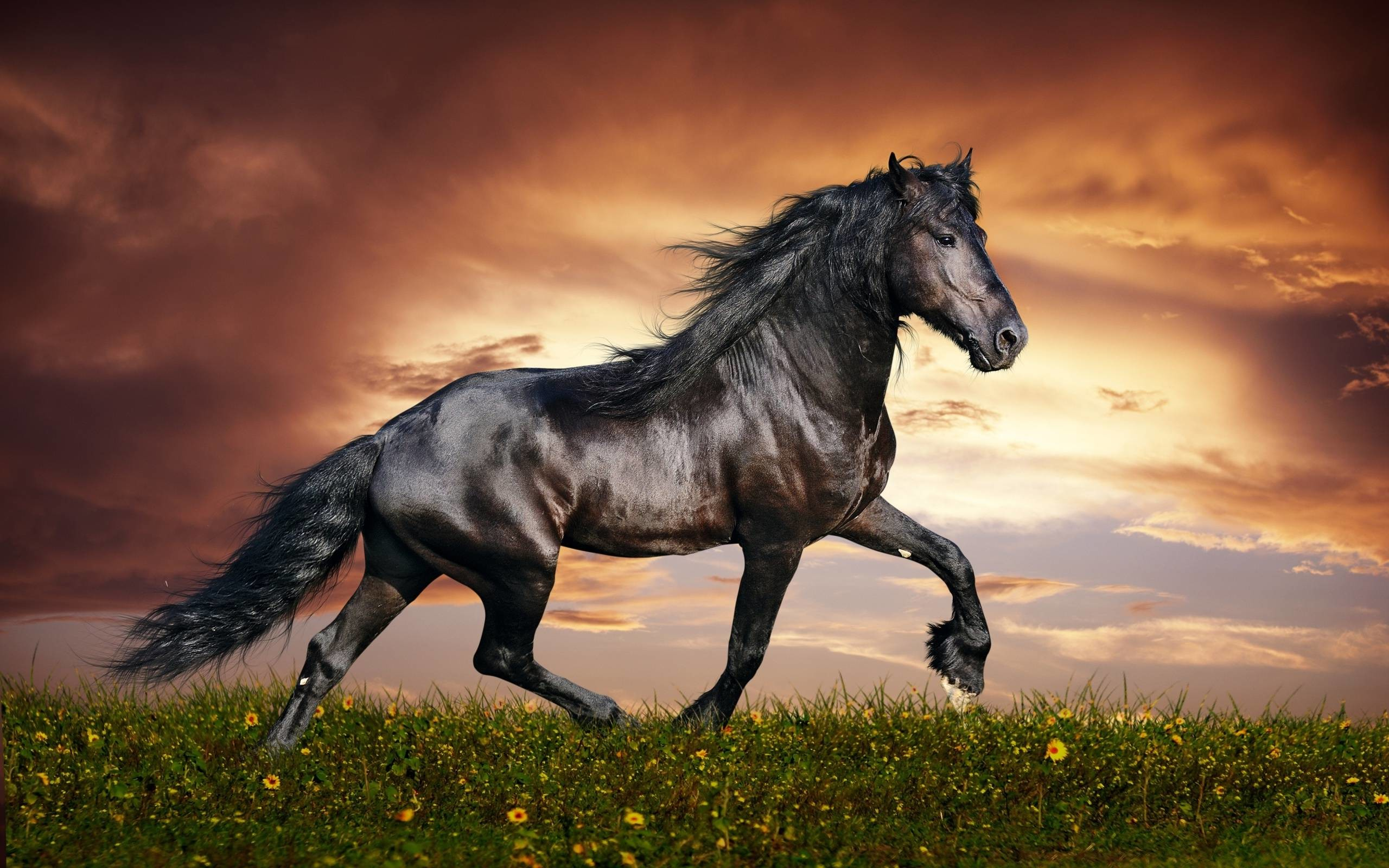 Arabian Horse Wallpaper 55 Images