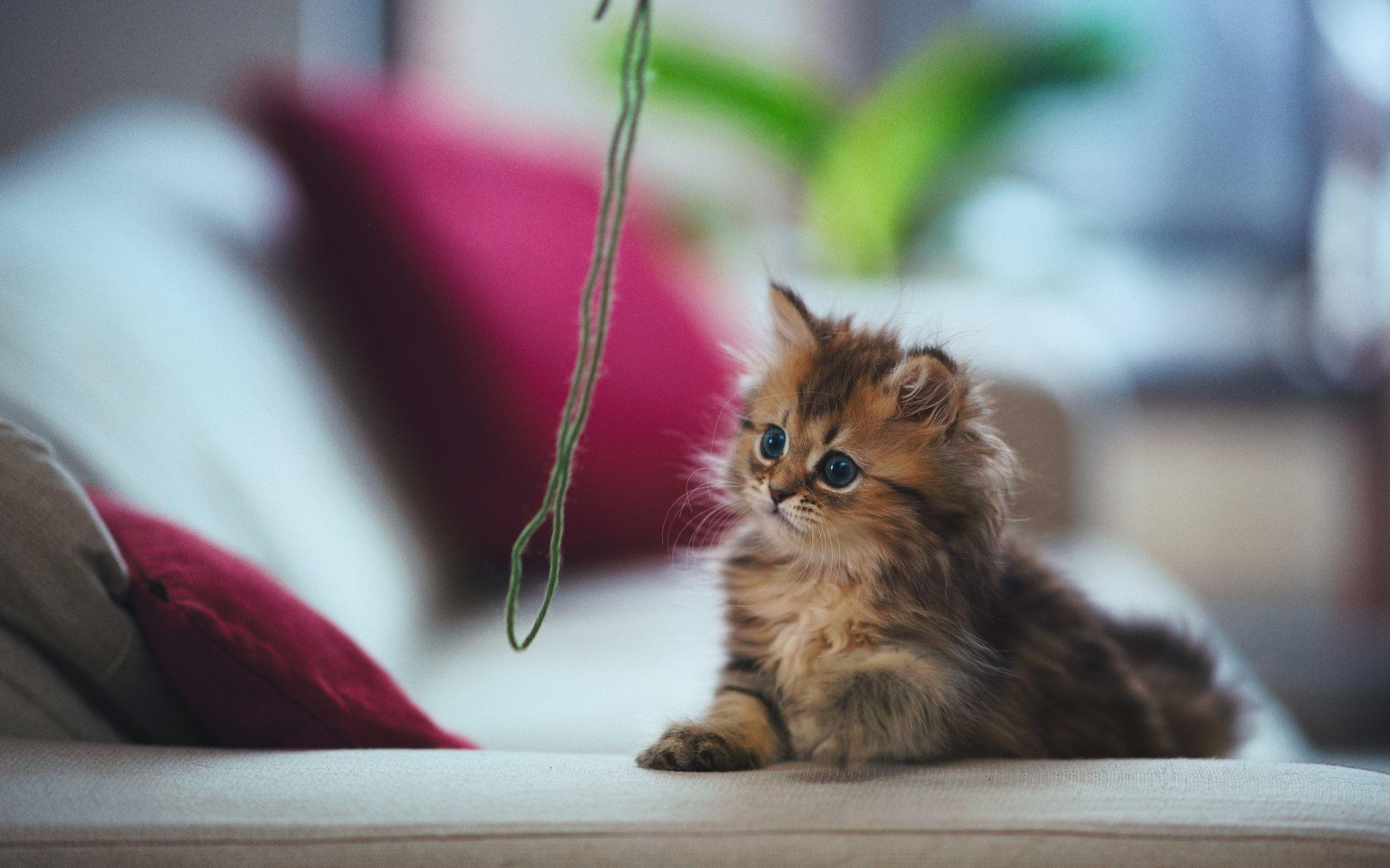 Kitten wallpaper for desktop 64 images - Kitten wallpaper ...