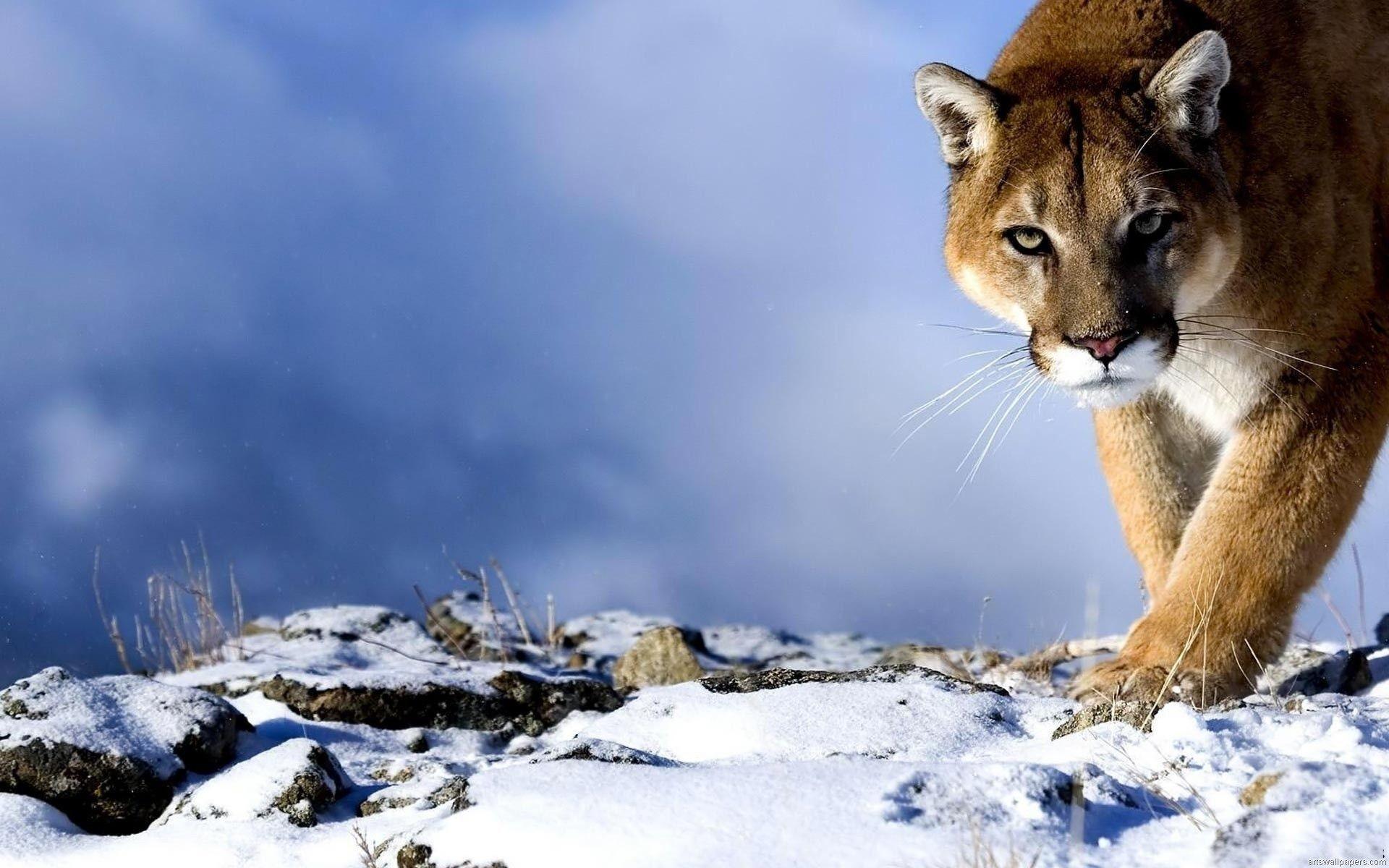Animal Winter Desktop Wallpaper 59 Images