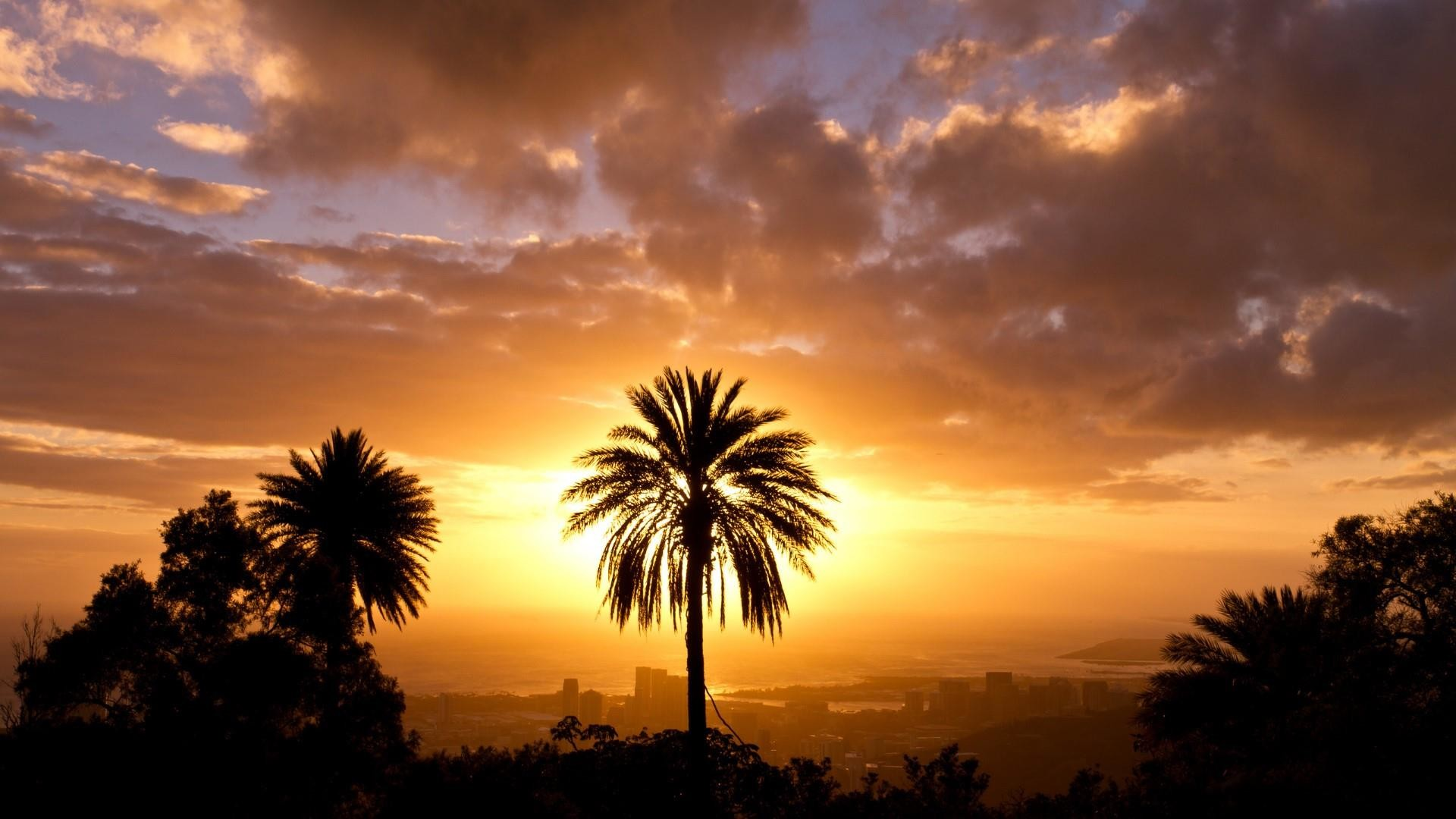 Palm Tree Sunset Wallpaper 70 Images