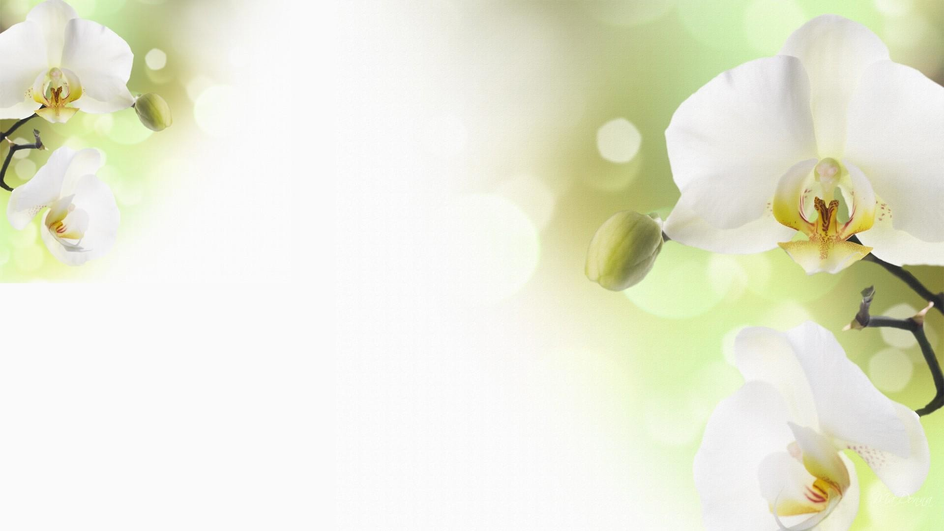 White Orchid Wallpaper (60+ images)