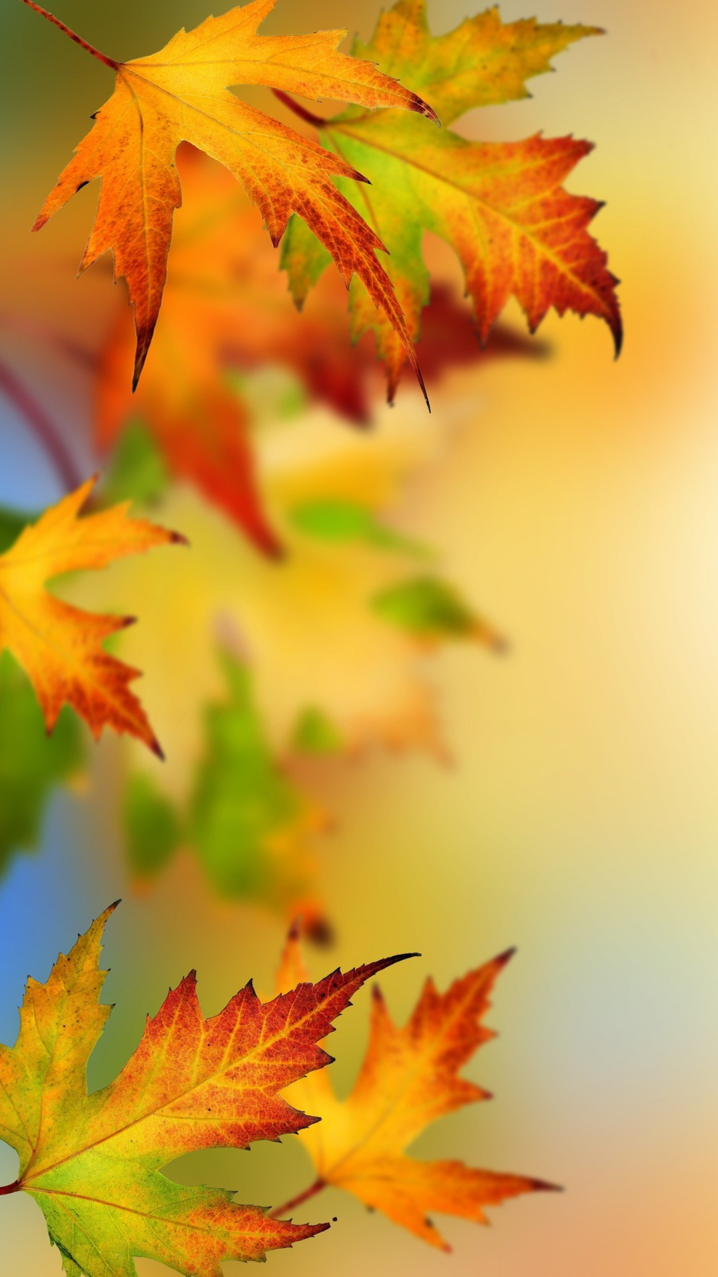 1440x2560  High Resolution Autumn Leaves Picture for Samsung Galaxy S7 and S7  Edge Wallpapers