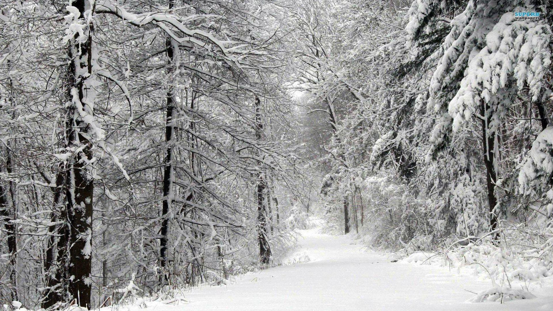 Winter Forest Black White Стоковые Фотографии 369671378 ... |Winter Forest Black And White