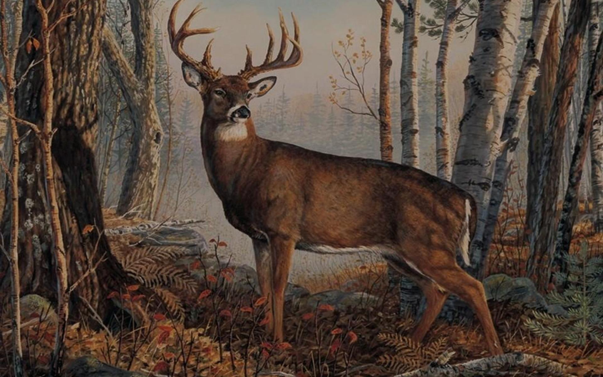 Whitetail Deer Desktop Backgrounds (58+ Images