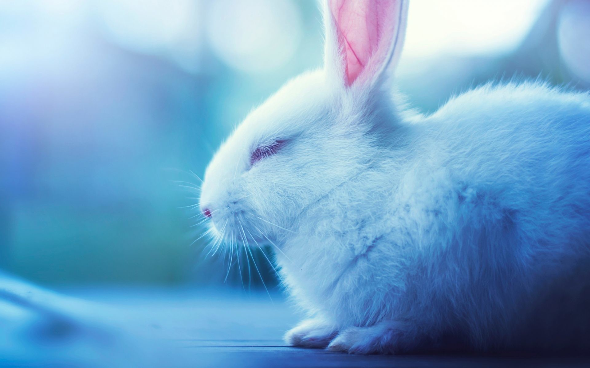 Cute Bunnies Wallpaper 65 Images