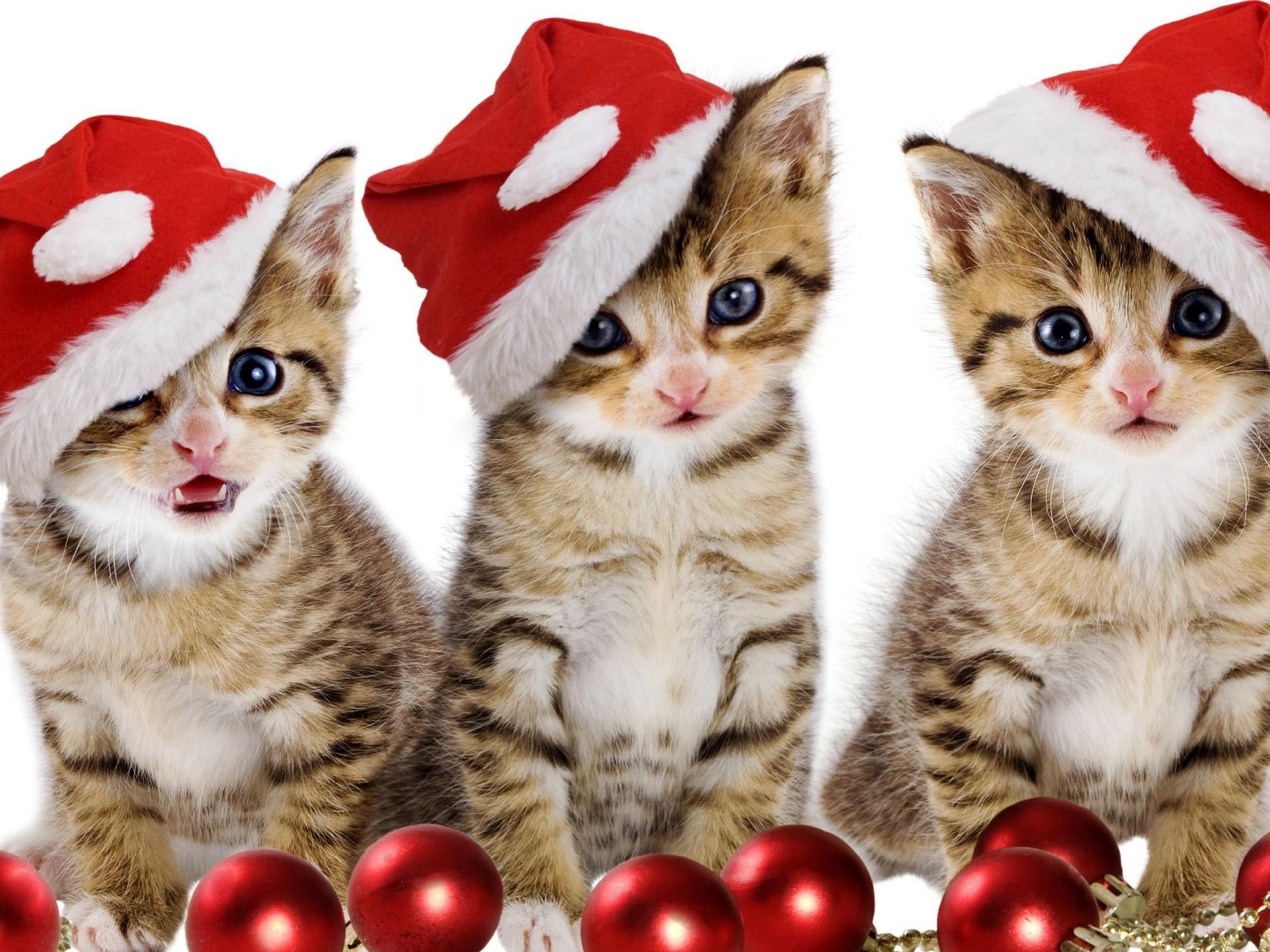 Free Cute Kitten Wallpapers  Wallpaper Cave