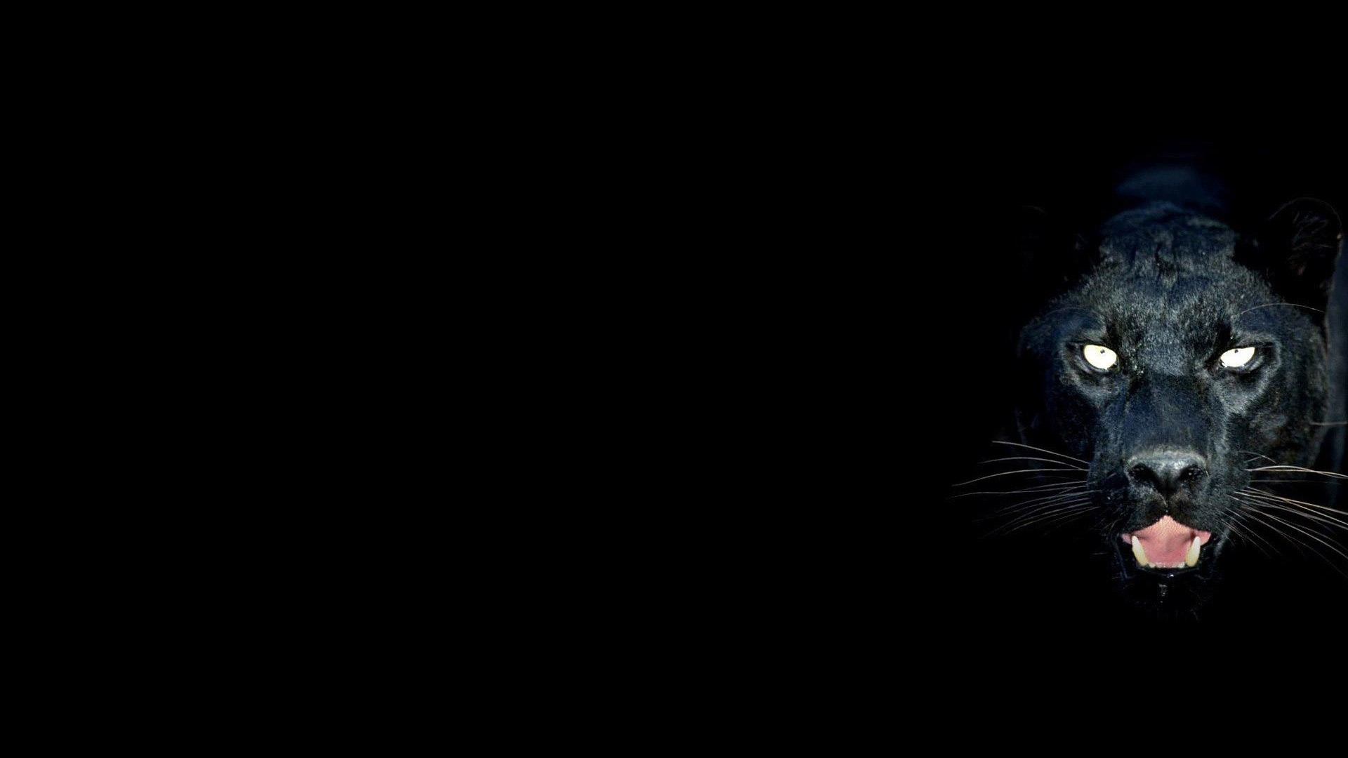 1920x1080 Black Panther Wallpaper With Blue Eyes Panther Wallpaper 1920x1080