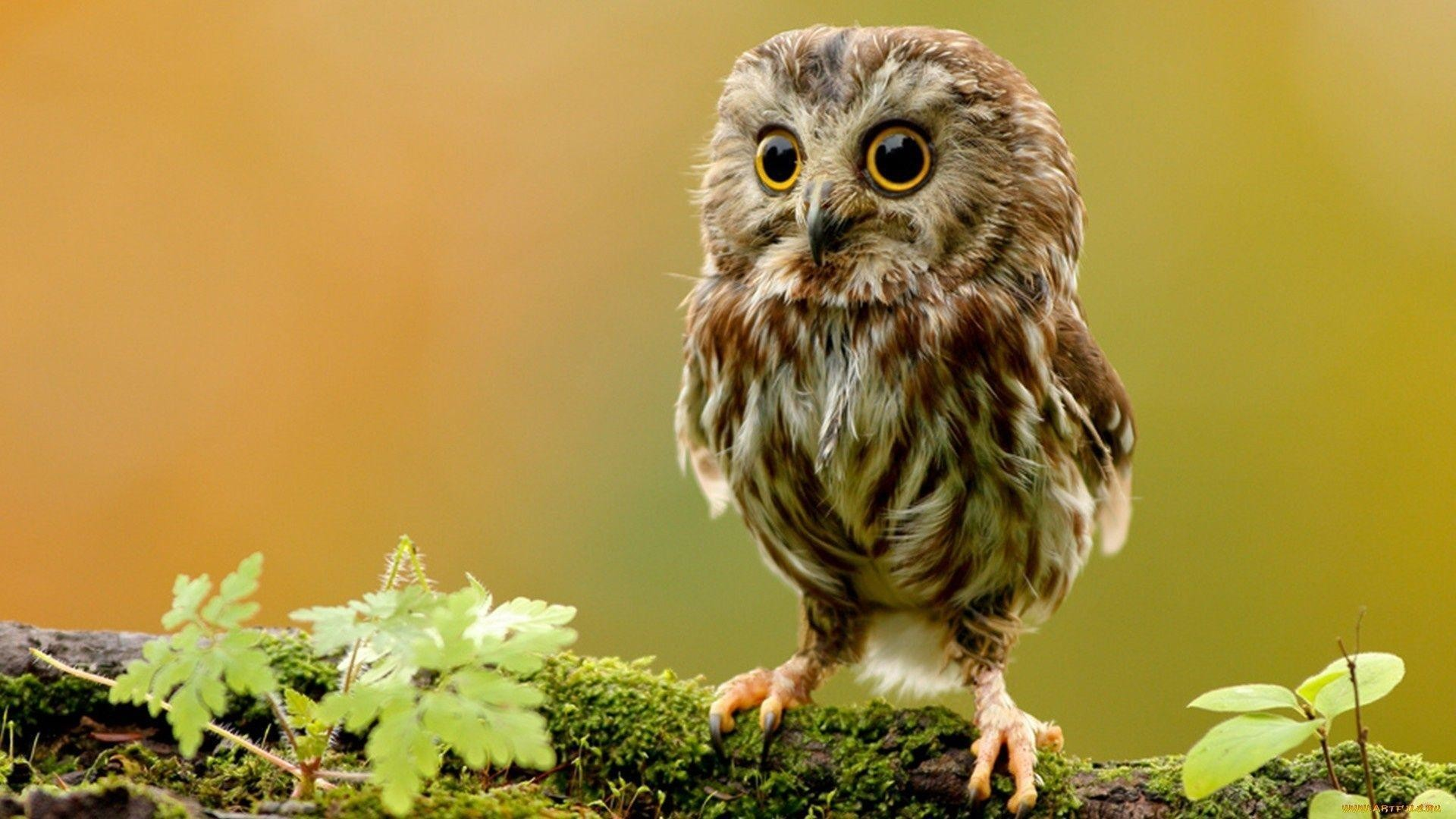 1920x1080 A selection of 10 Images of Owl in HD quality