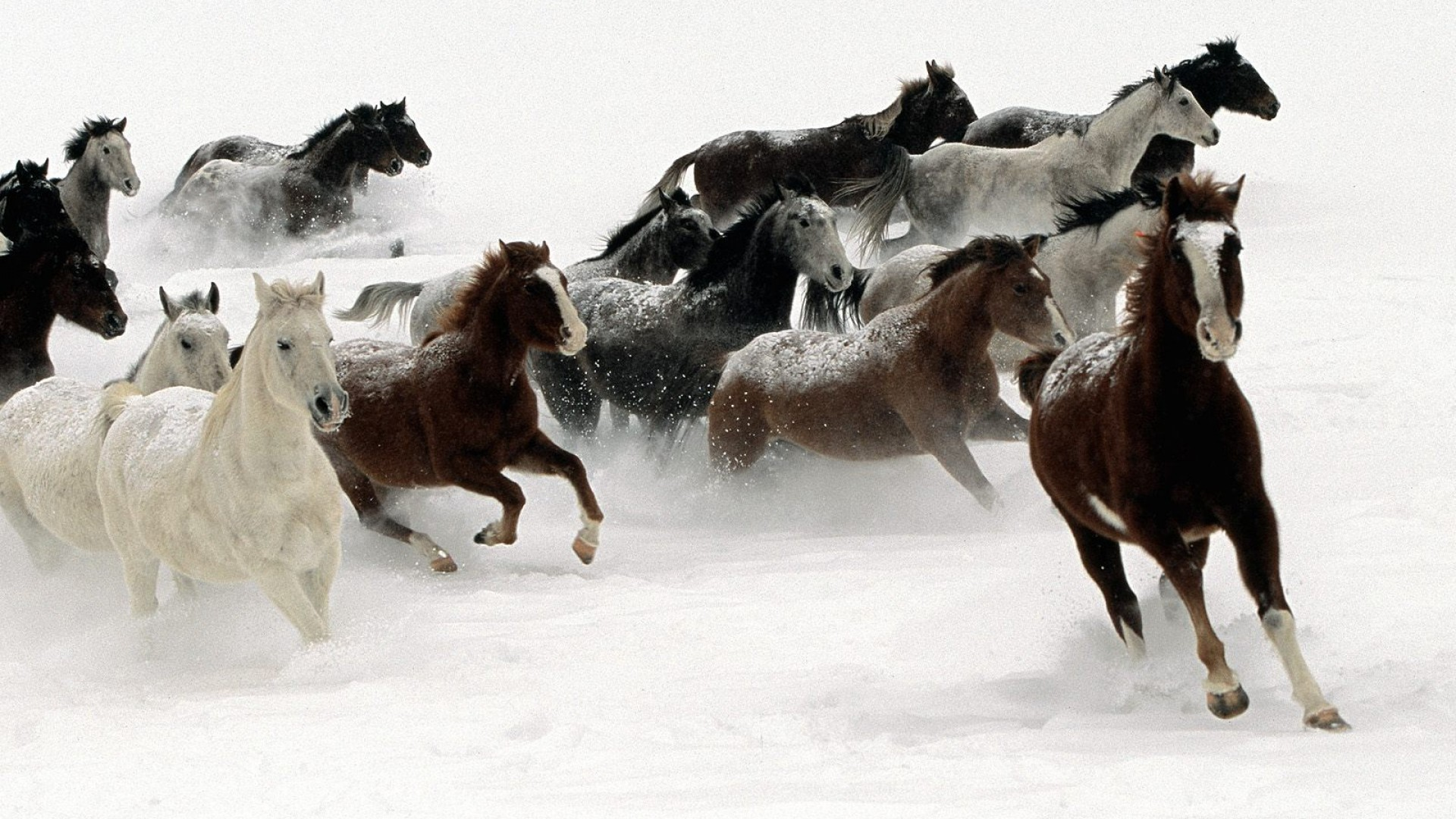 Christmas Horses Wallpaper For Computer 71 Images