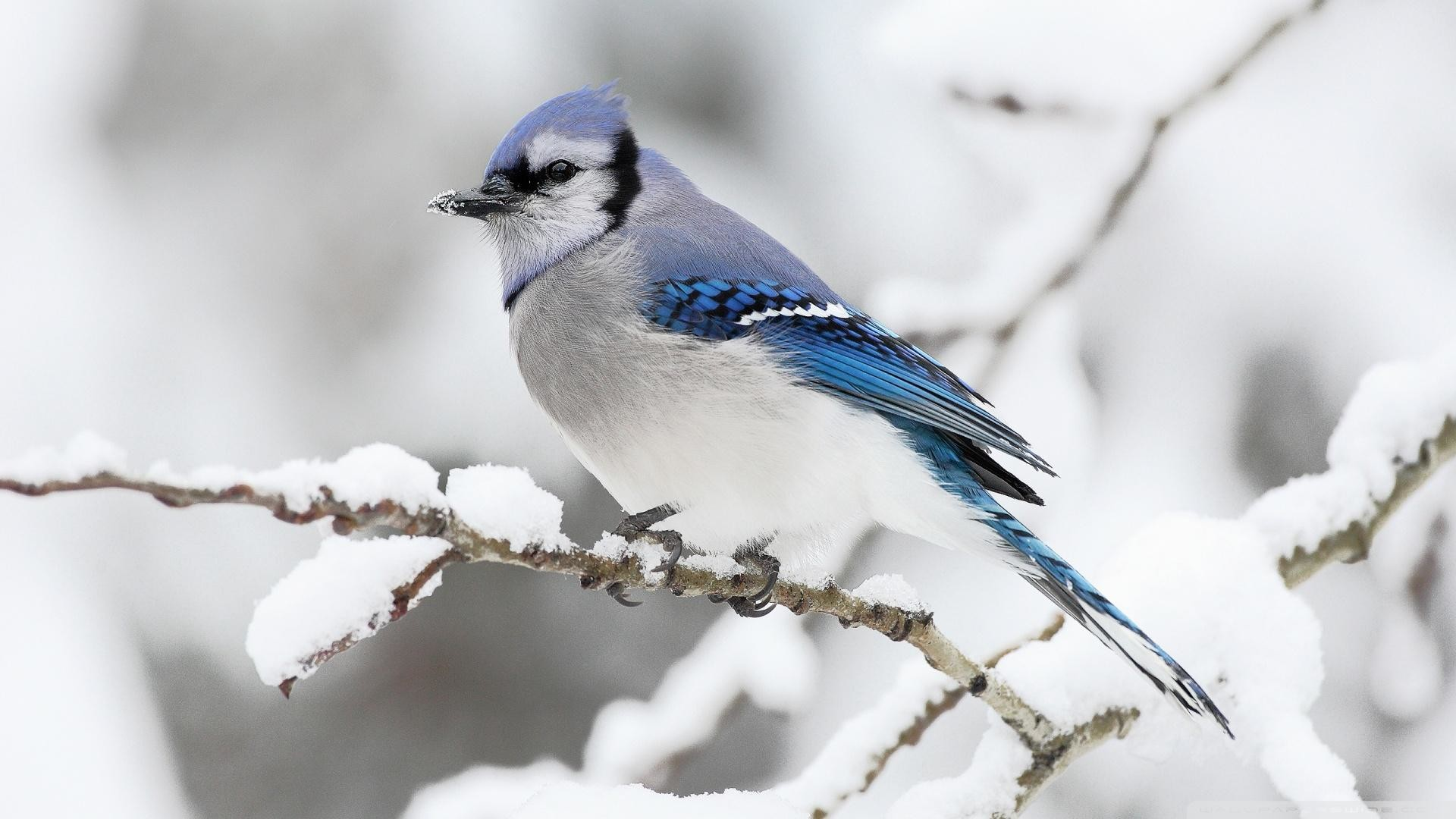 wallpaper with birds (46+ images)