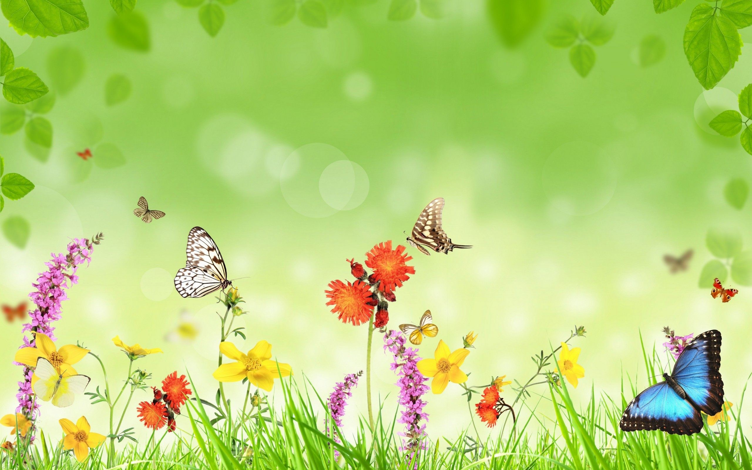 2560x1600 ... Flower With Butterfly Wallpaper HD Download High Quality ...