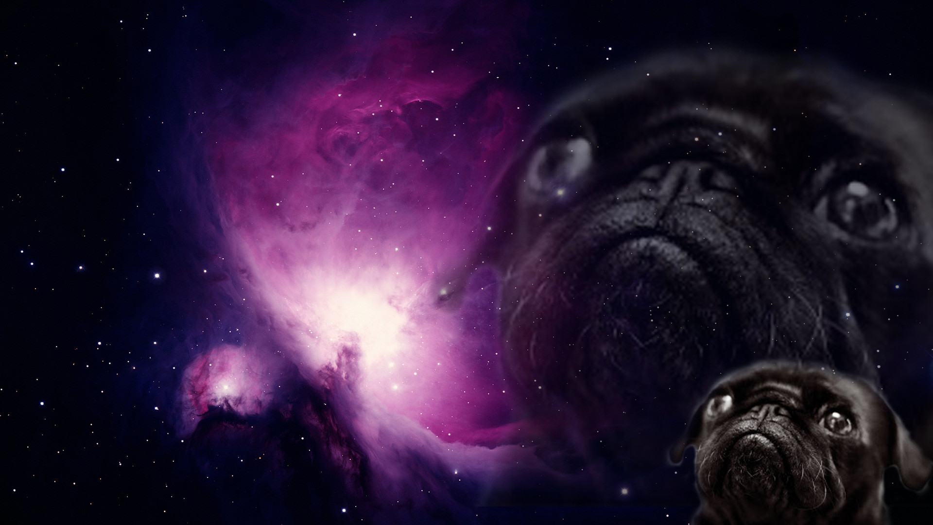 Download Pug Dog Hd Wallpaper Gallery: Funny Pug Pictures Wallpaper (75+ Images