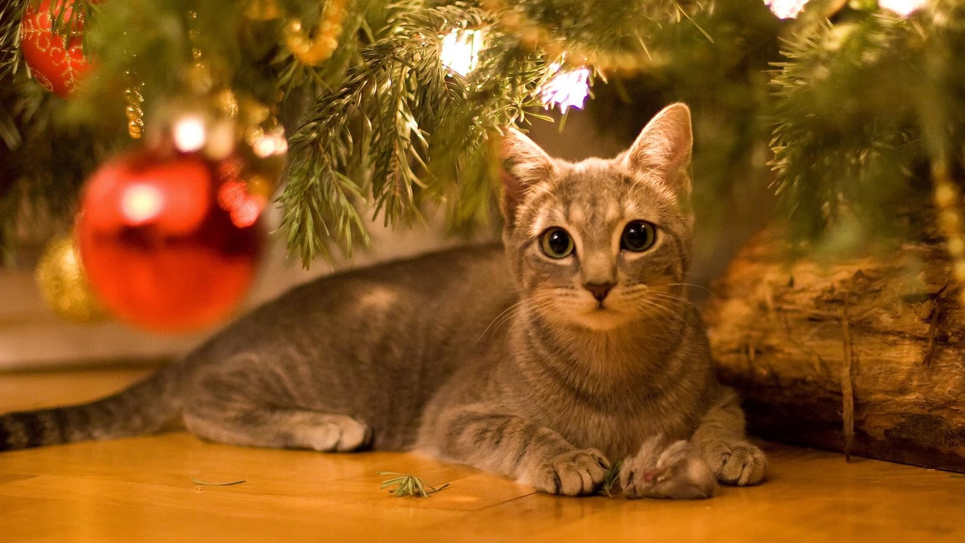 christmas wallpaper with cats 55 images