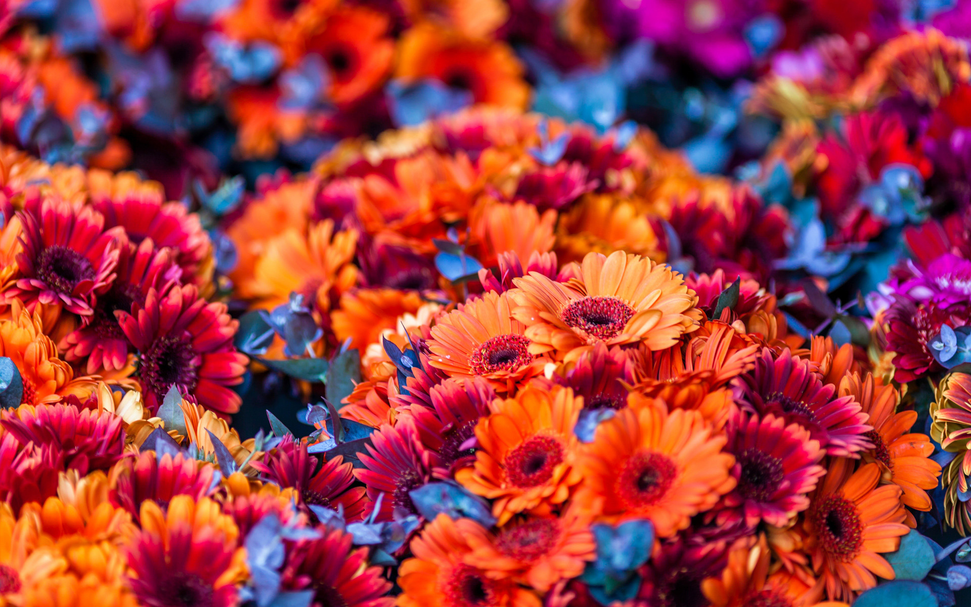 1920x1200 Colorful Flowers Blurred Background HD Wallpaper
