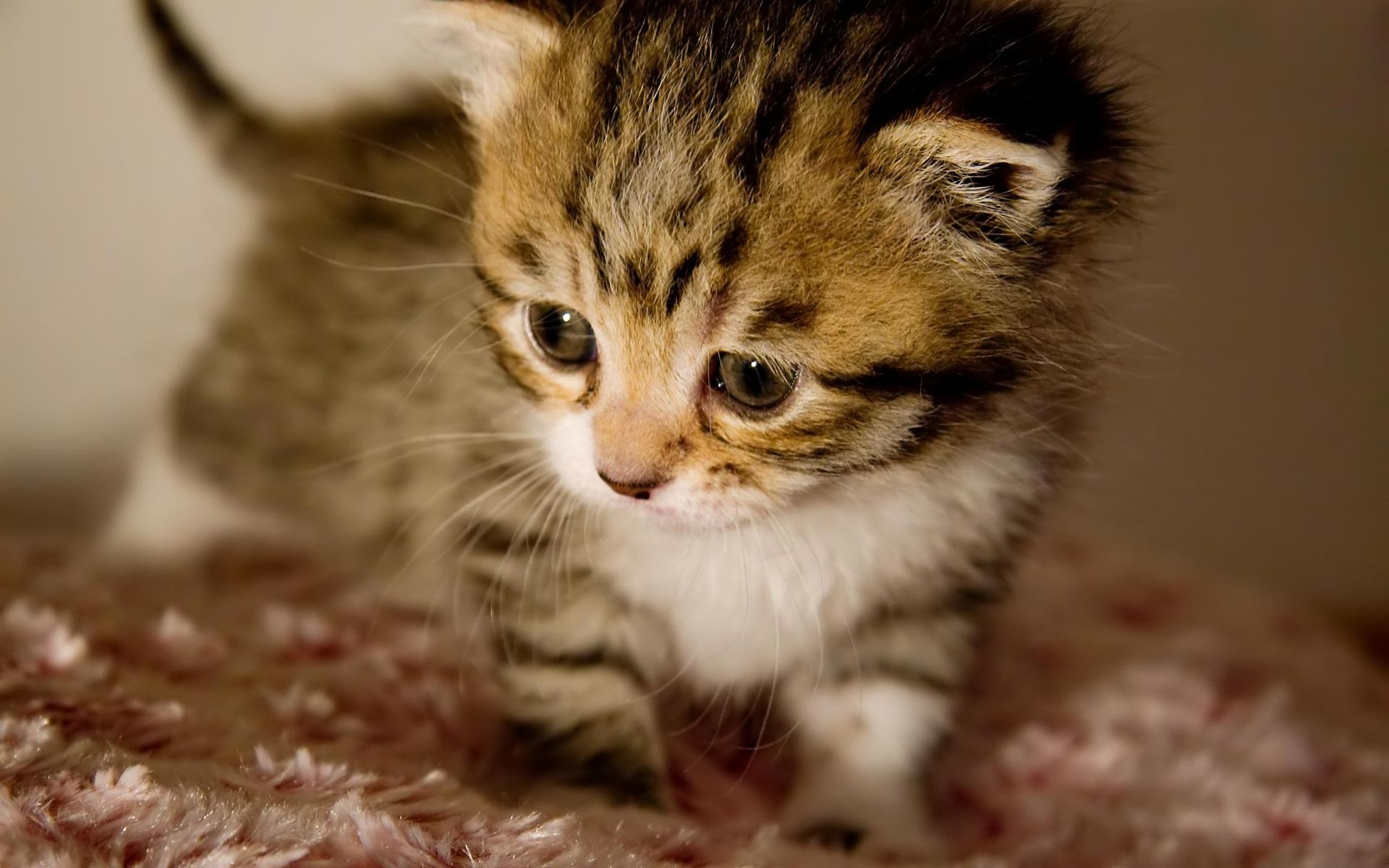1920x1200 Cute Kitten Pictures Wallpapers (44 Wallpapers)
