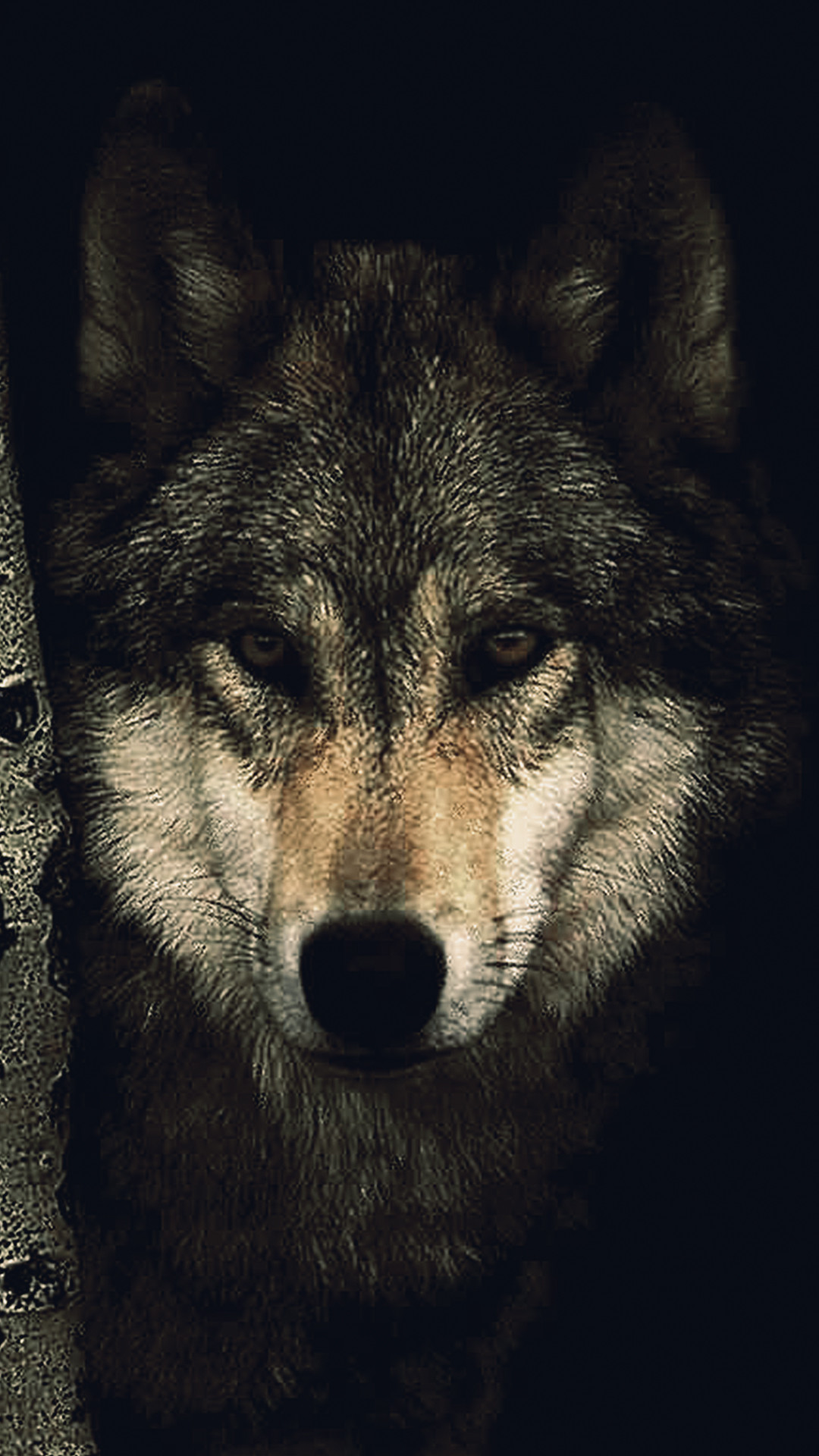 1080x1920 Wolf Wallpapers – Animal Spot