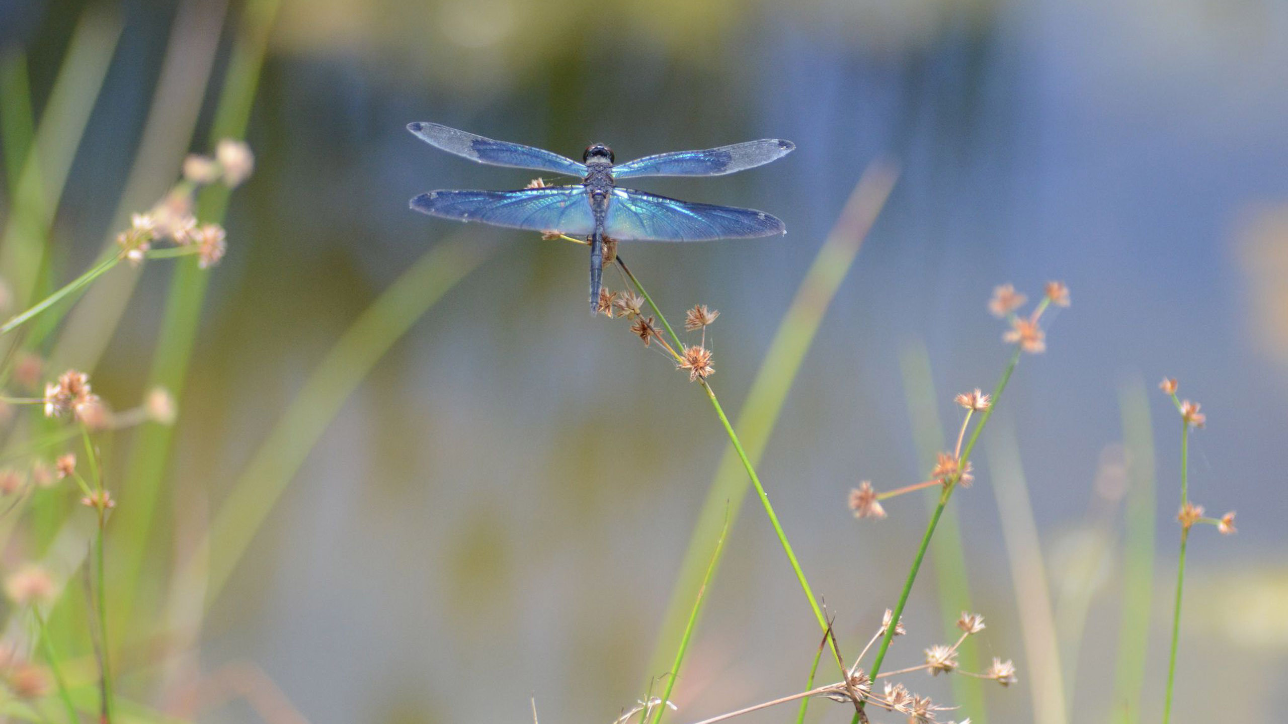 dragonfly screensavers and wallpaper 43 images