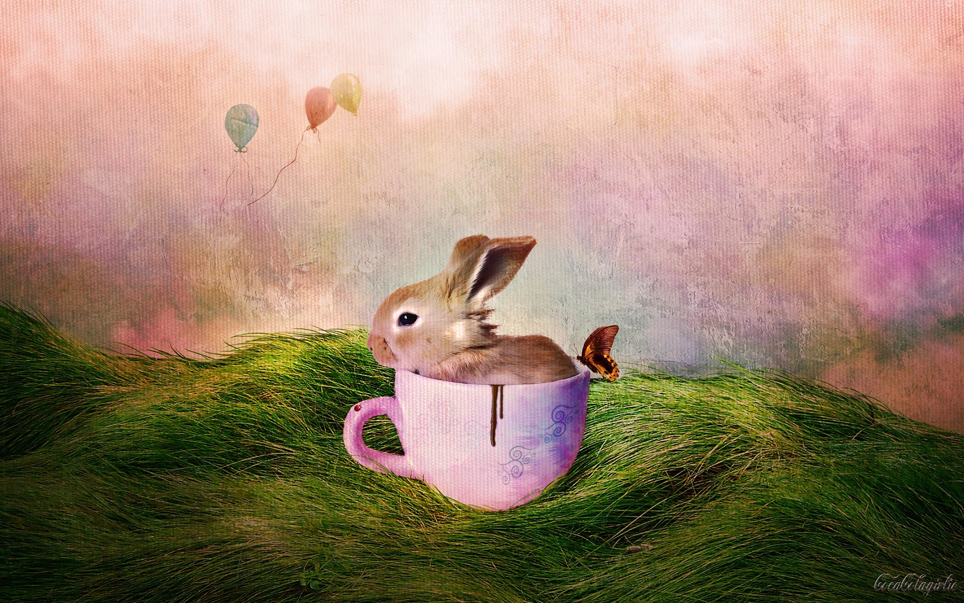 Bunny Wallpapers 59 Images