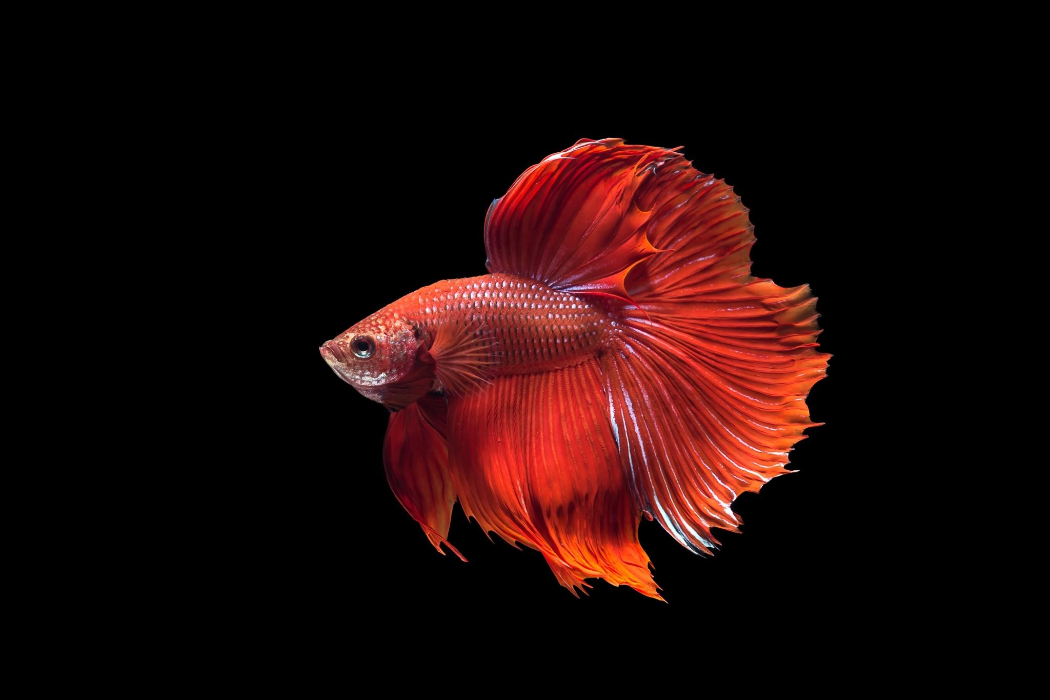 IPhone 6S Fish Wallpapers (75+ images)