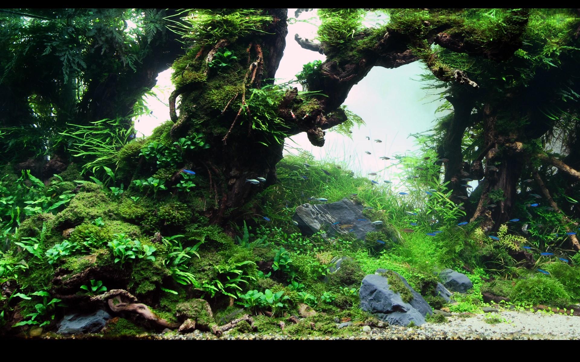 1920x1080 Aquarium Screensaver Fishtank 1080p HD TROPICAL