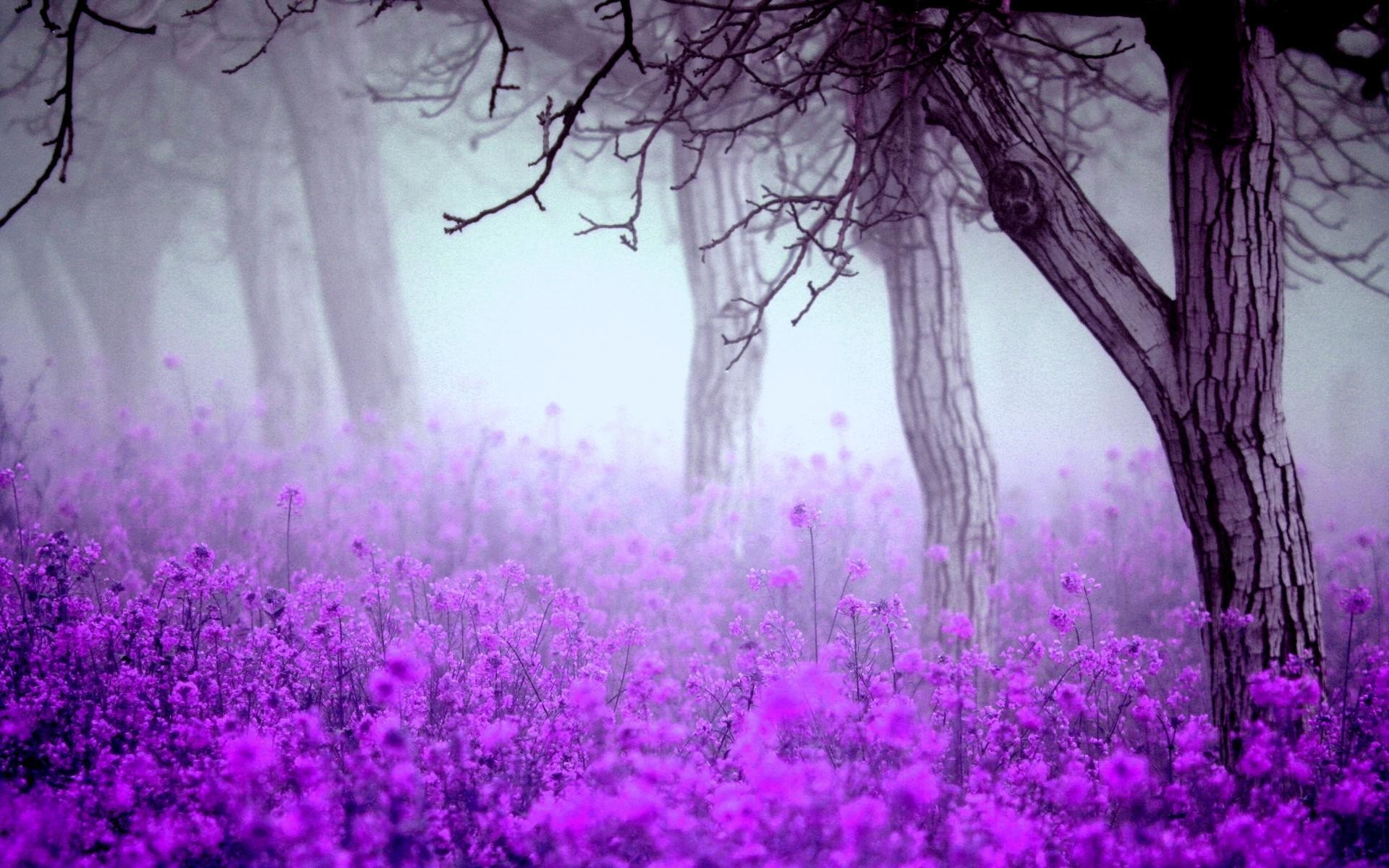 1920x1200 Lavender Desktop Wallpaper 1752×1378 Lavender Flower Backgrounds (39  Wallpapers) | Adorable Wallpapers