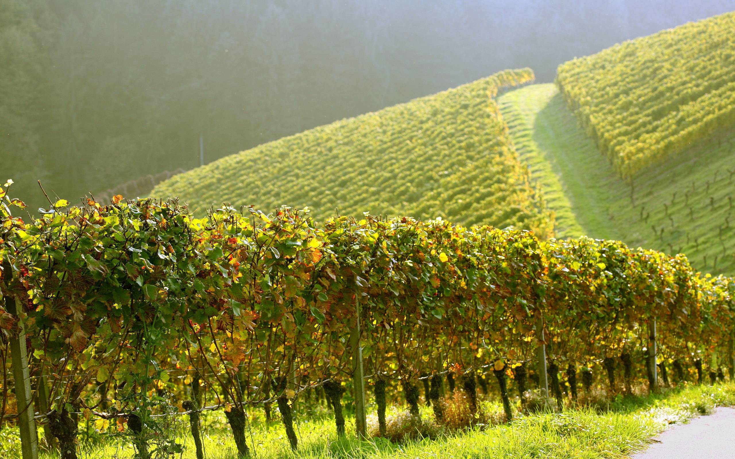 2560x1600 68 Vineyard Wallpapers | Vineyard Backgrounds Page 2