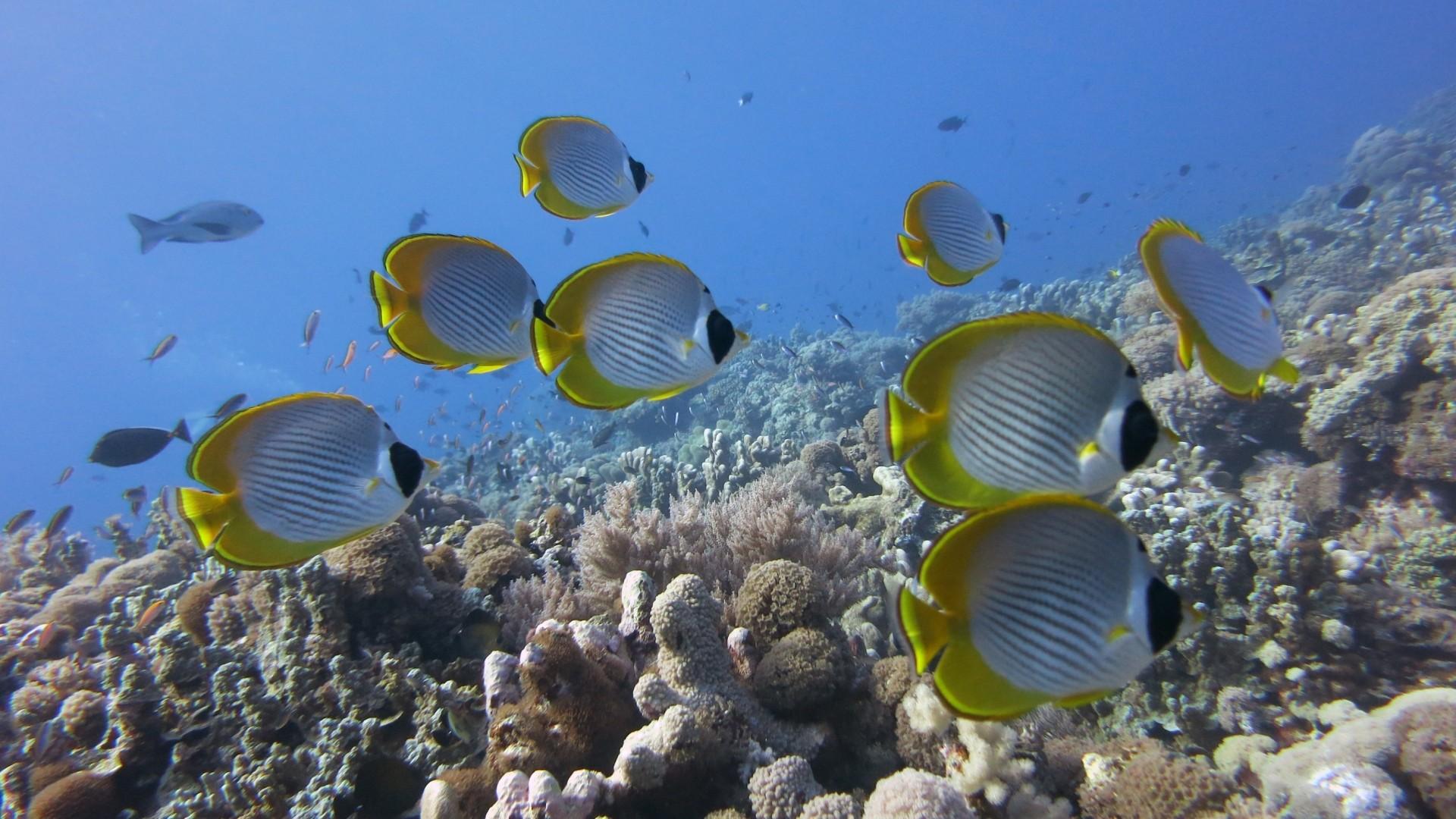 fish wallpaper and screensavers 58 images