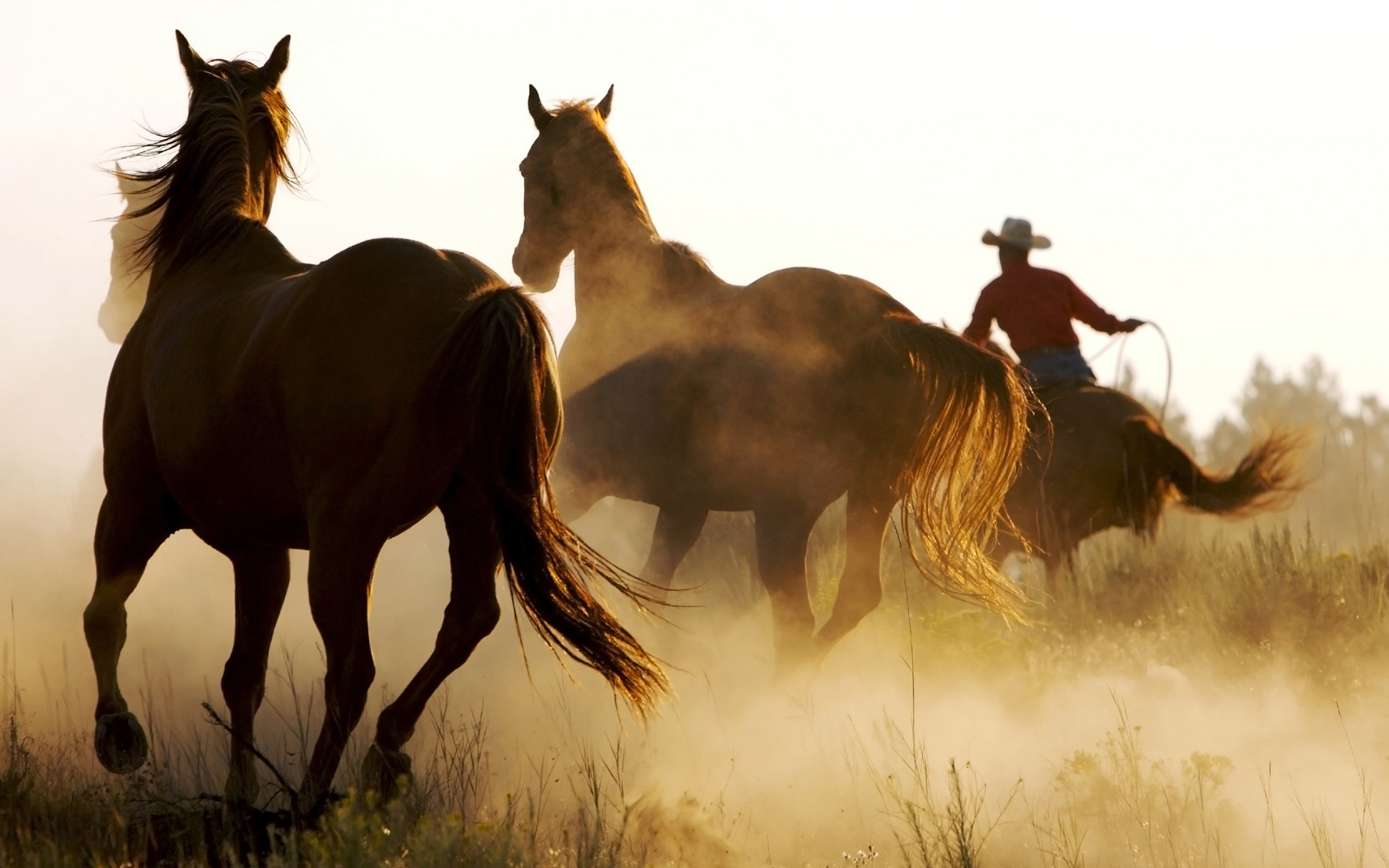 2560x1600 cowboys horses wild nature widescreen background picture animal zoo HD  Wallpapers for desktop computer, high definition wallpapers for Dual  monitors and ...