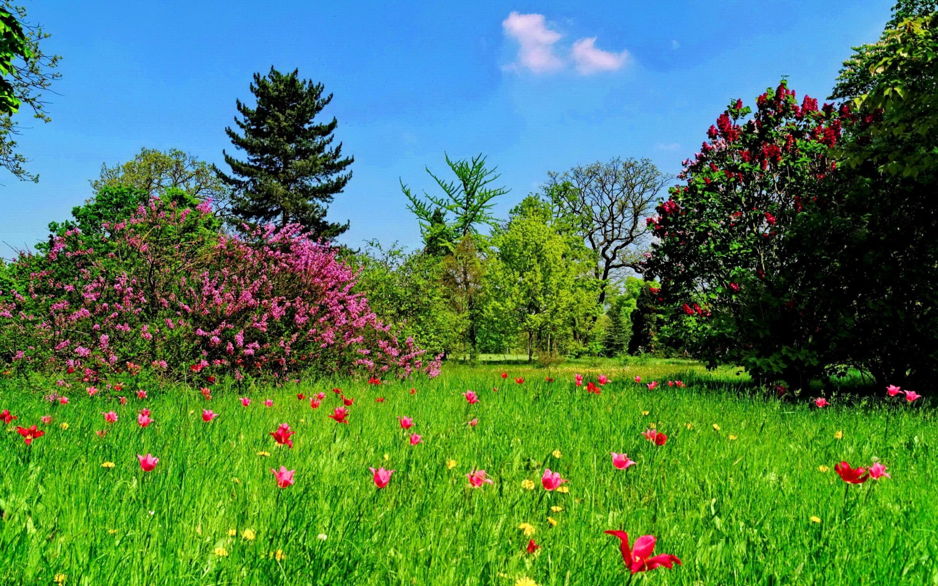 Spring Screensavers And Wallpaper 48 Images