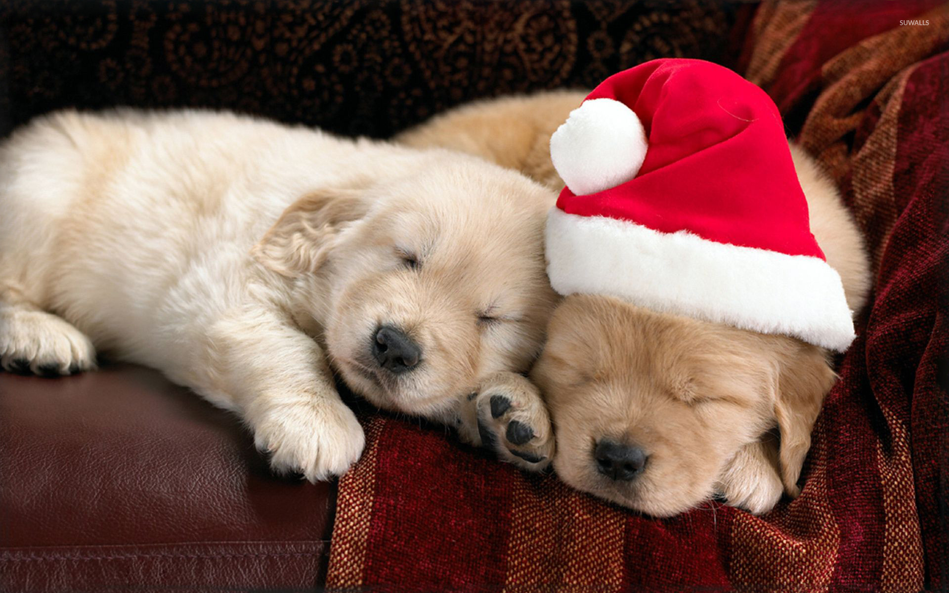 1920x1200 Adorable puppies sleeping on the couch on Christmas Eve wallpaper   jpg