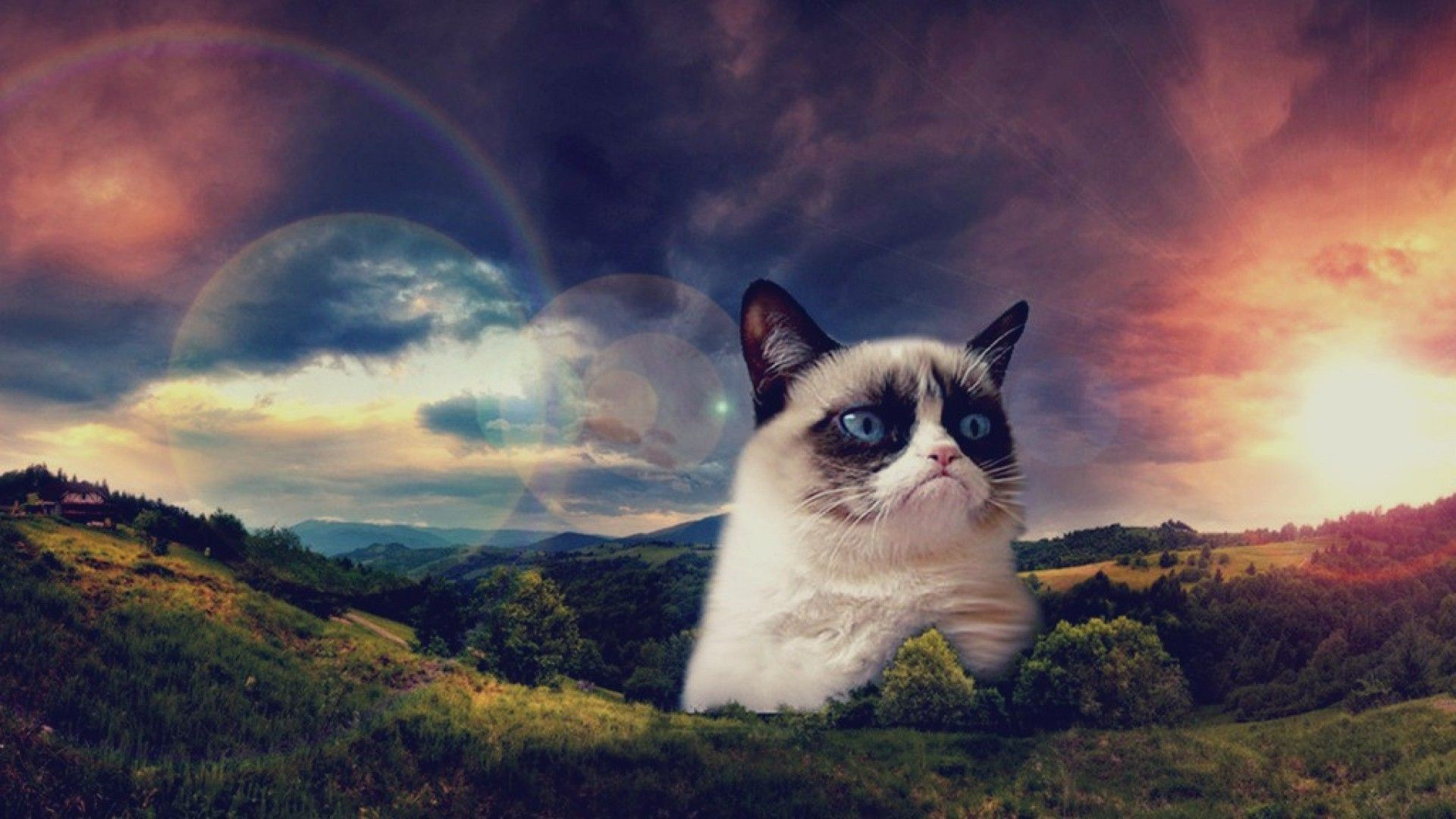 Space cats hd wallpaper 78 images - Space kitty wallpaper ...