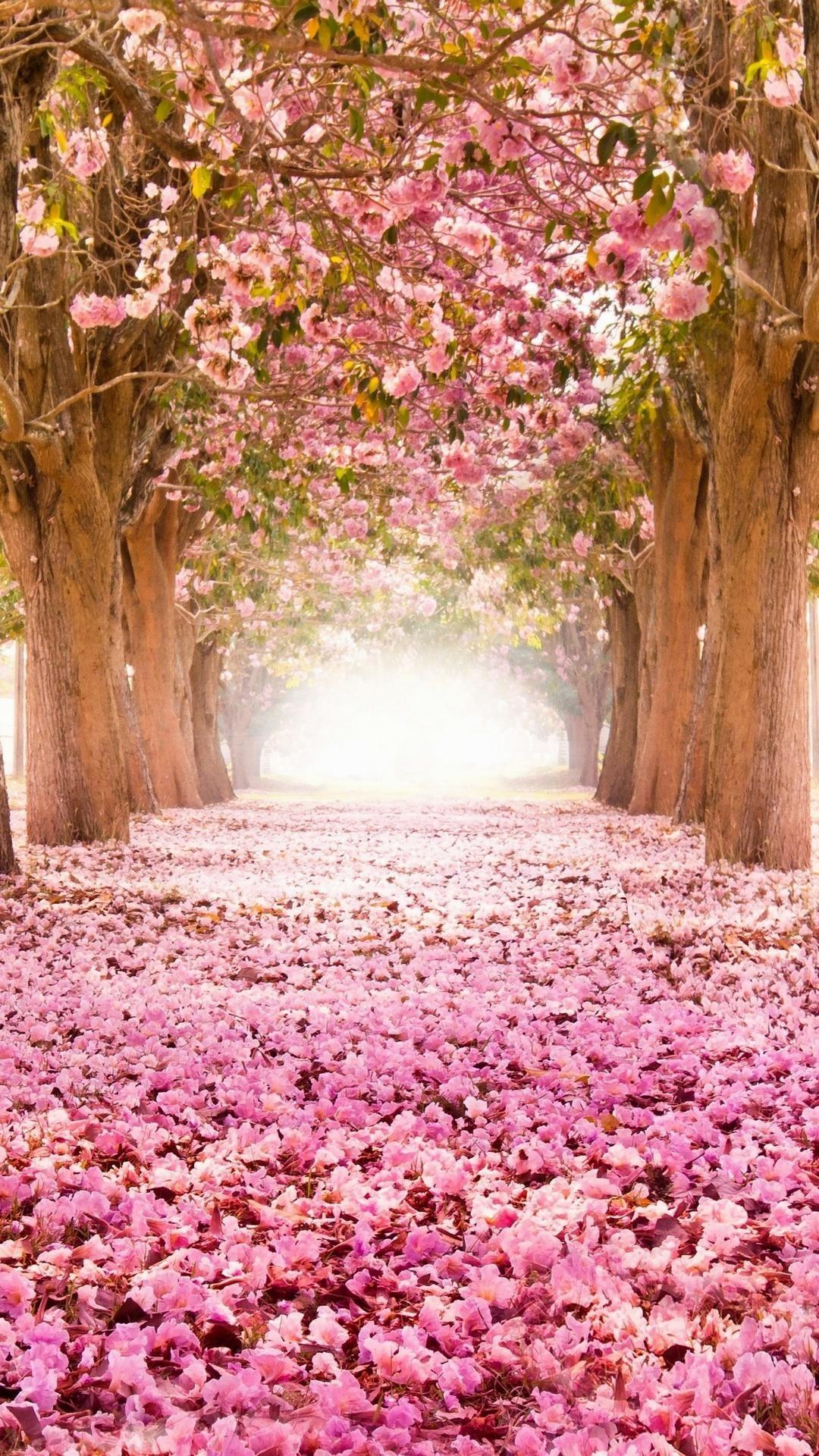 1080x1920 Wallpaperwiki Free Cherry Blossom IPhone Photo PIC