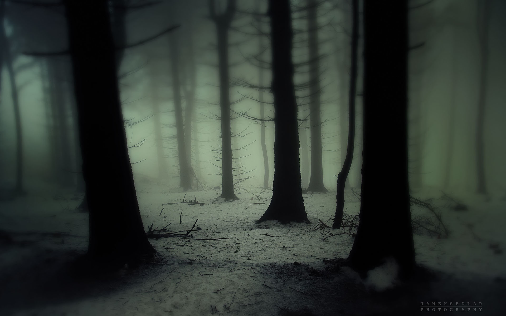 1920x1200 trees forest wood gloom snowing snow winter fog haze mist cold spooky .