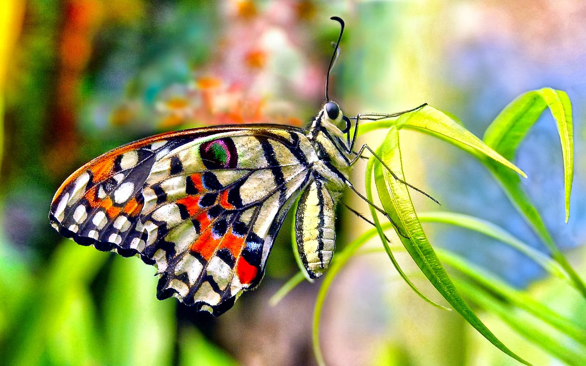 1920x1200 butterfly-wallpaper-hd-cute-1024x640