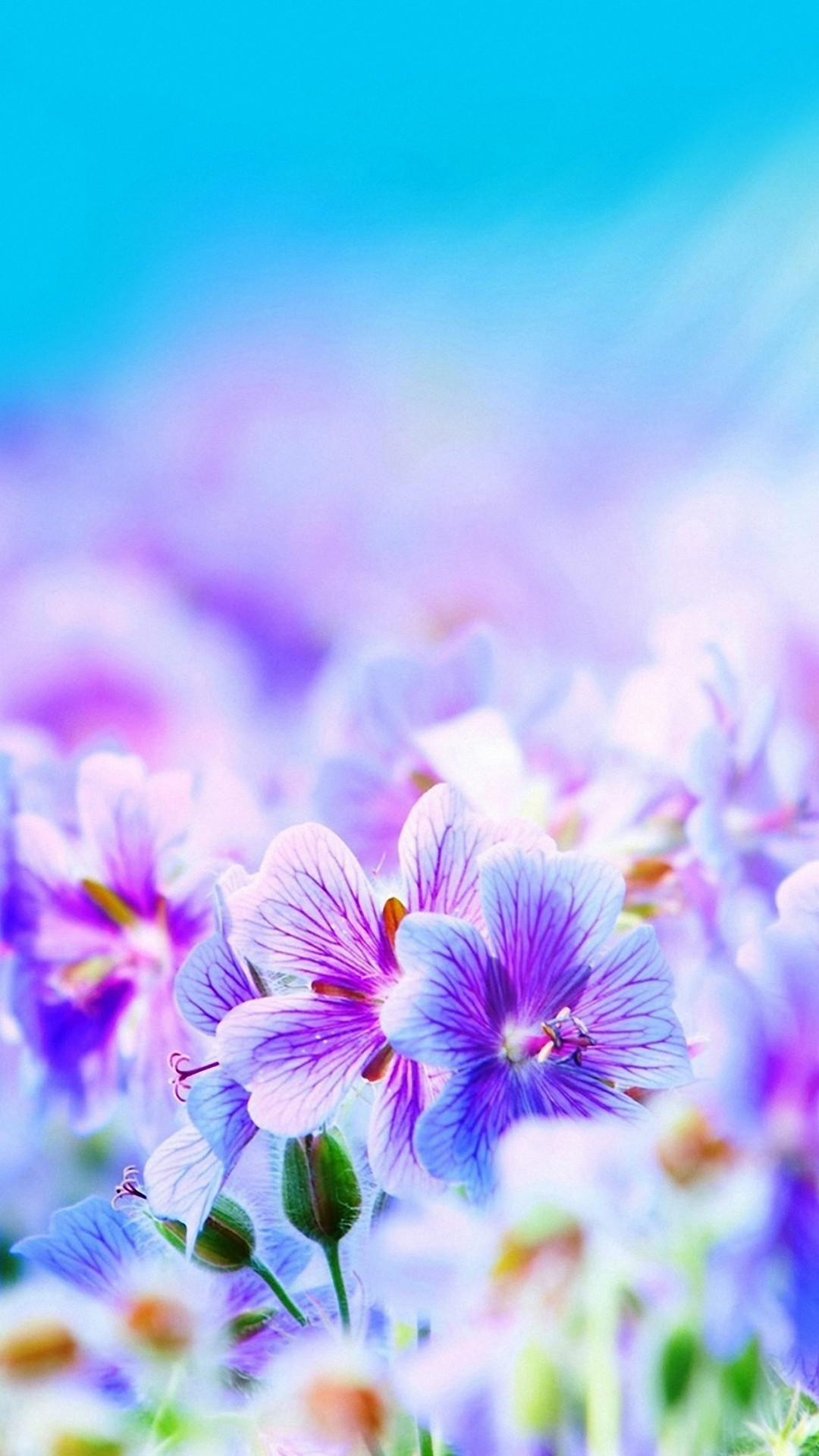 1080x1920 Purple Pretty Flowers iPhone 6s Wallpapers HD
