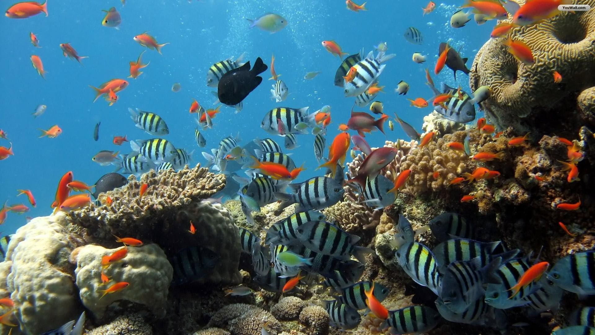 1920x1080 PC  Coral Reef Wallpapers, Desktop-Screens Pack II