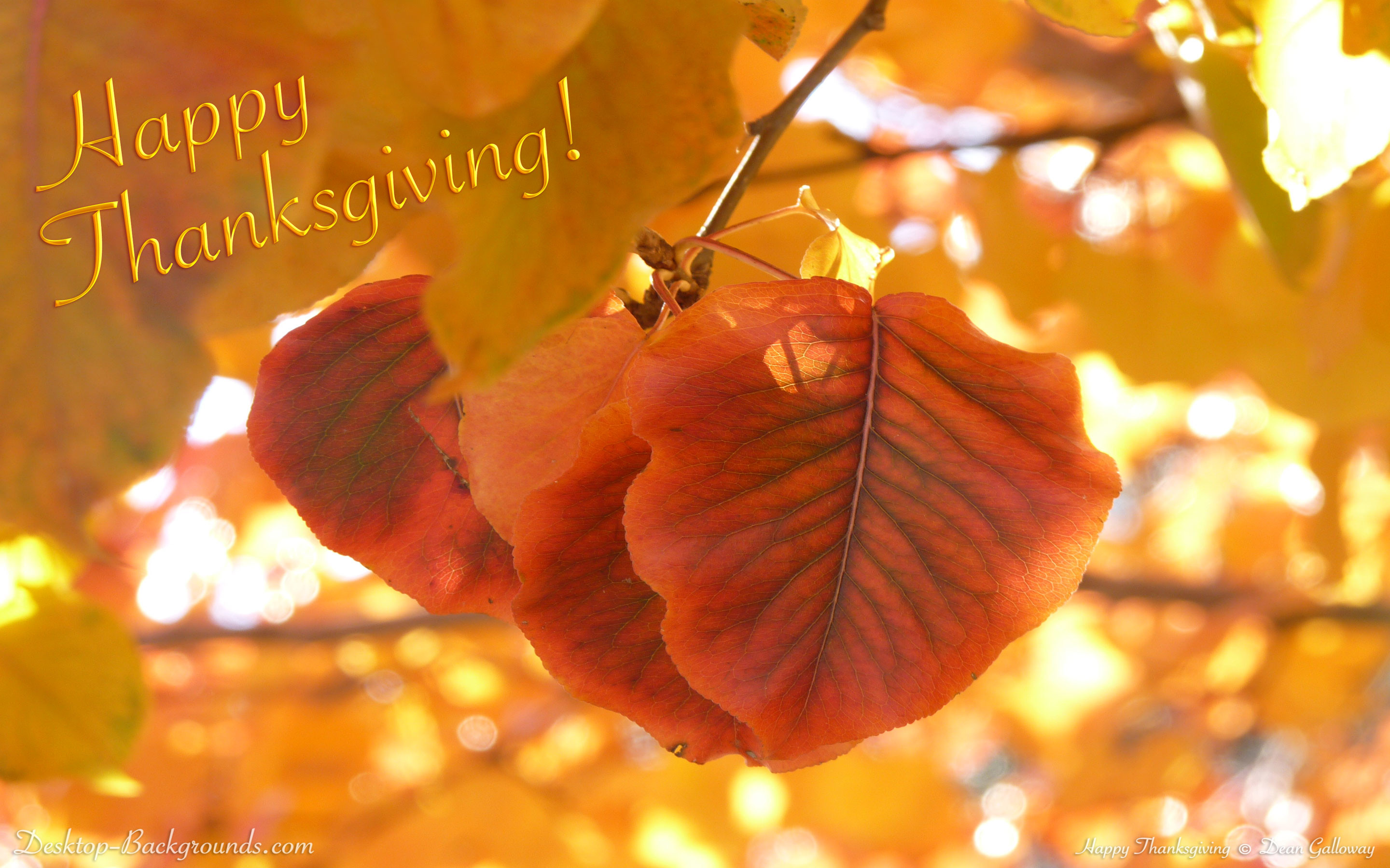 cute thanksgiving wallpapers for desktop 60 images